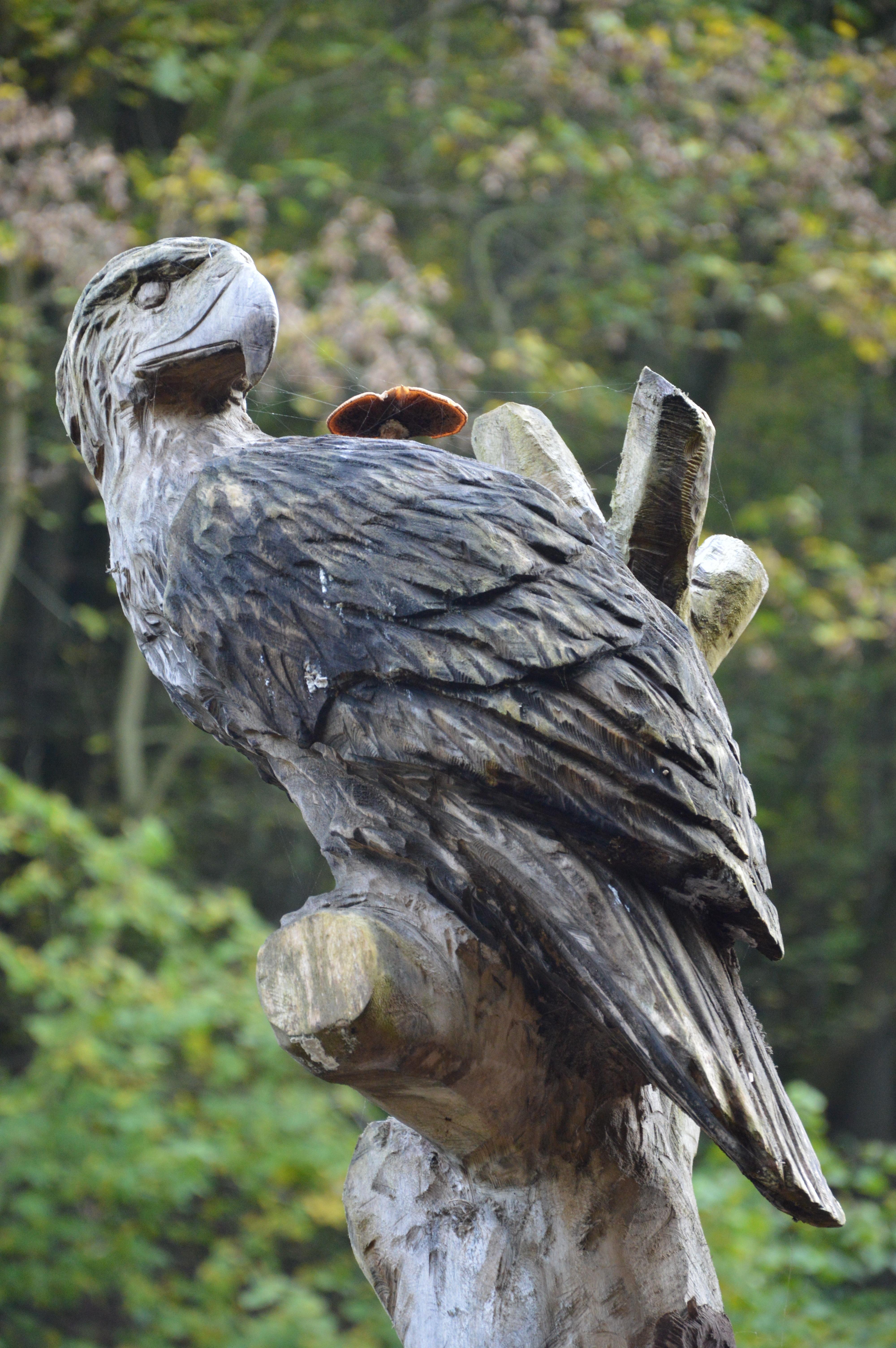 55+ Gambar Burung Elang Dari Kayu Terbaik