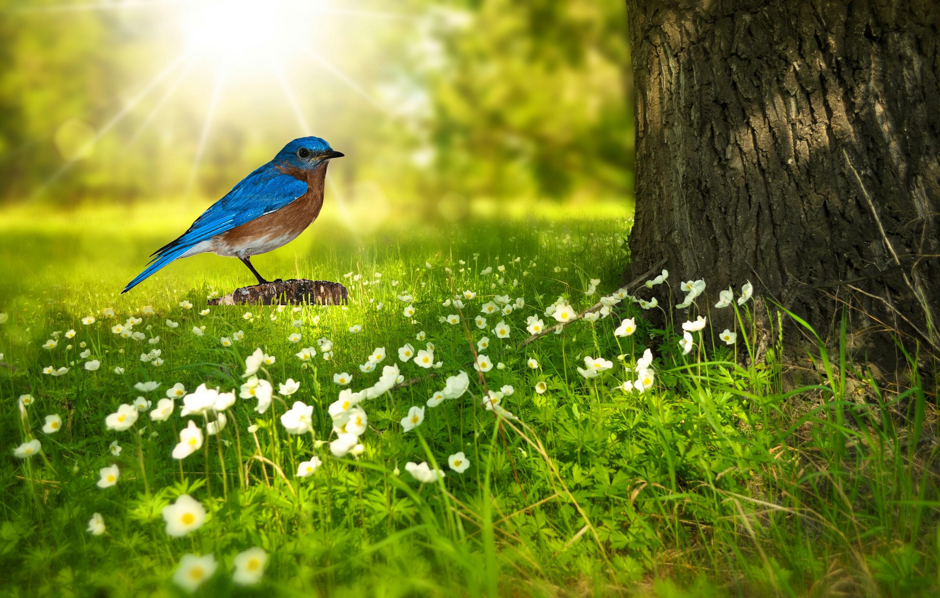 вопрос кто картинка поляна птиц настоящий пушистый