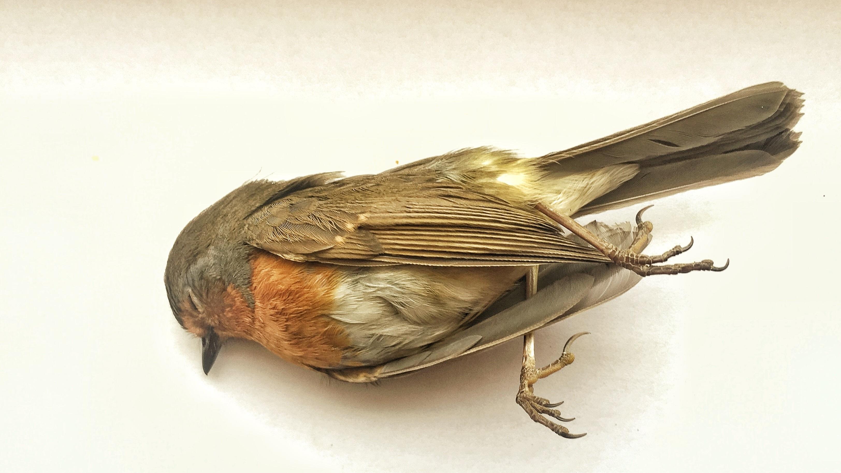 Kostenlose foto : Vogel, Holz, Horn, Traurigkeit, Insekt ...