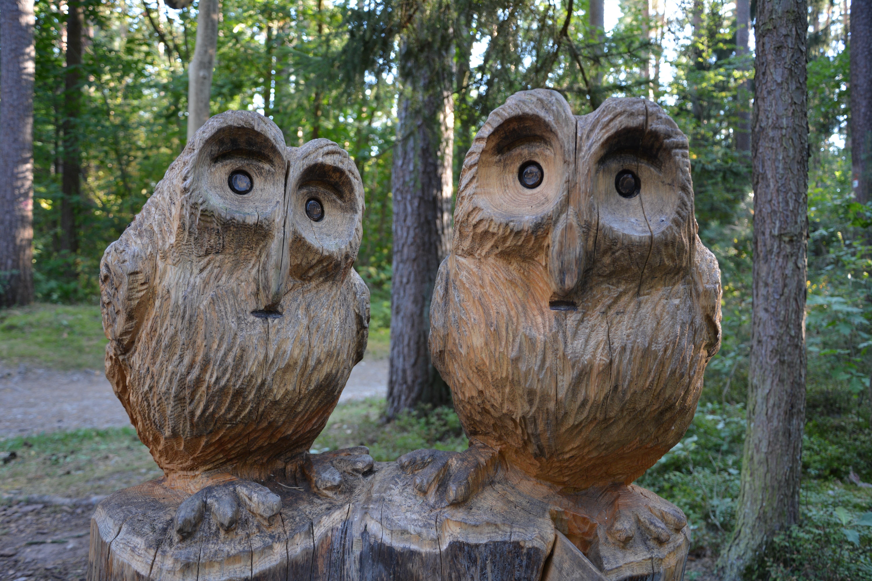 Bildet fugl dyreliv vennskap fauna kunstverk