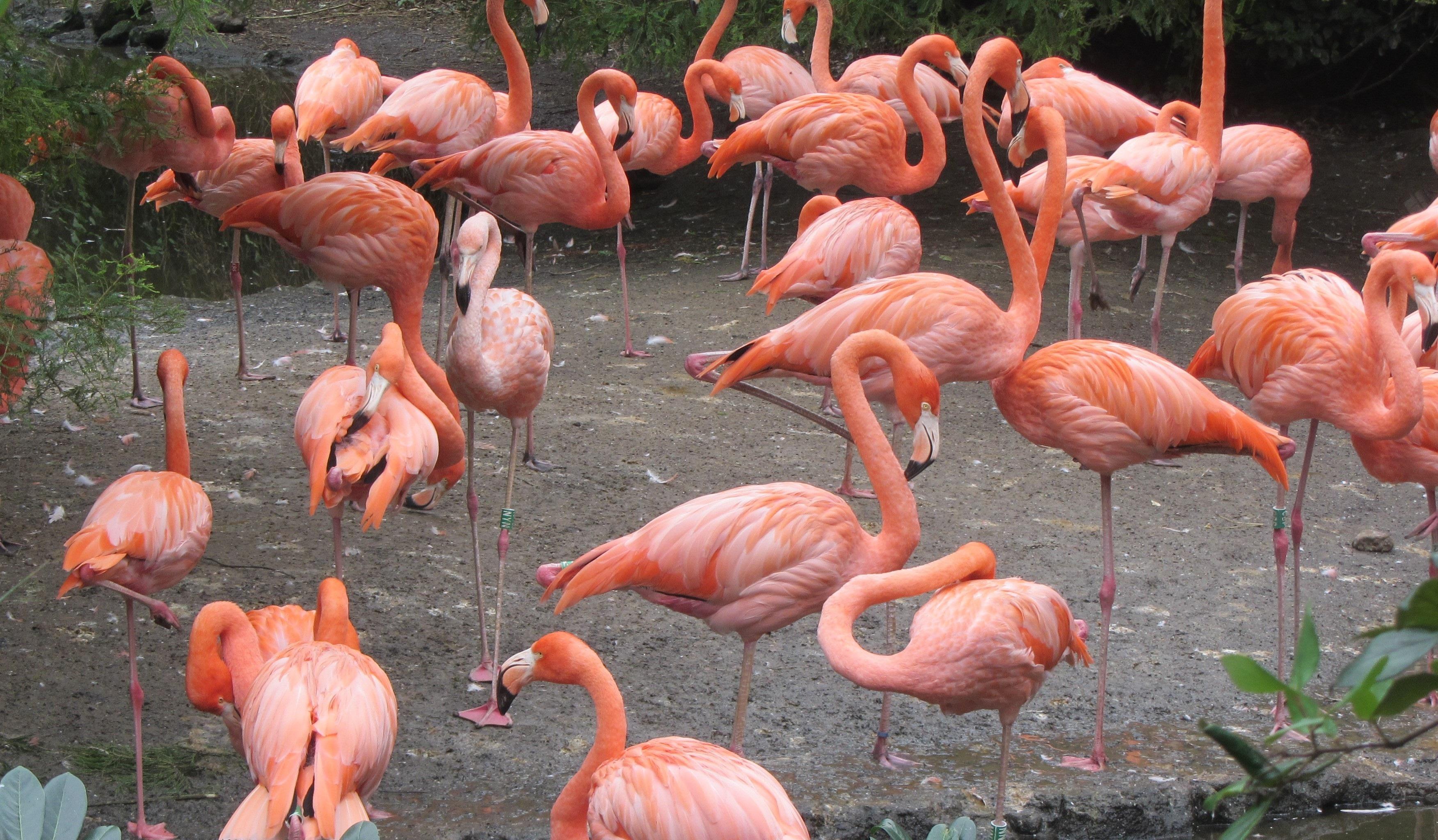 banco de imagens jardim zoológico bico rosa fauna flamingo