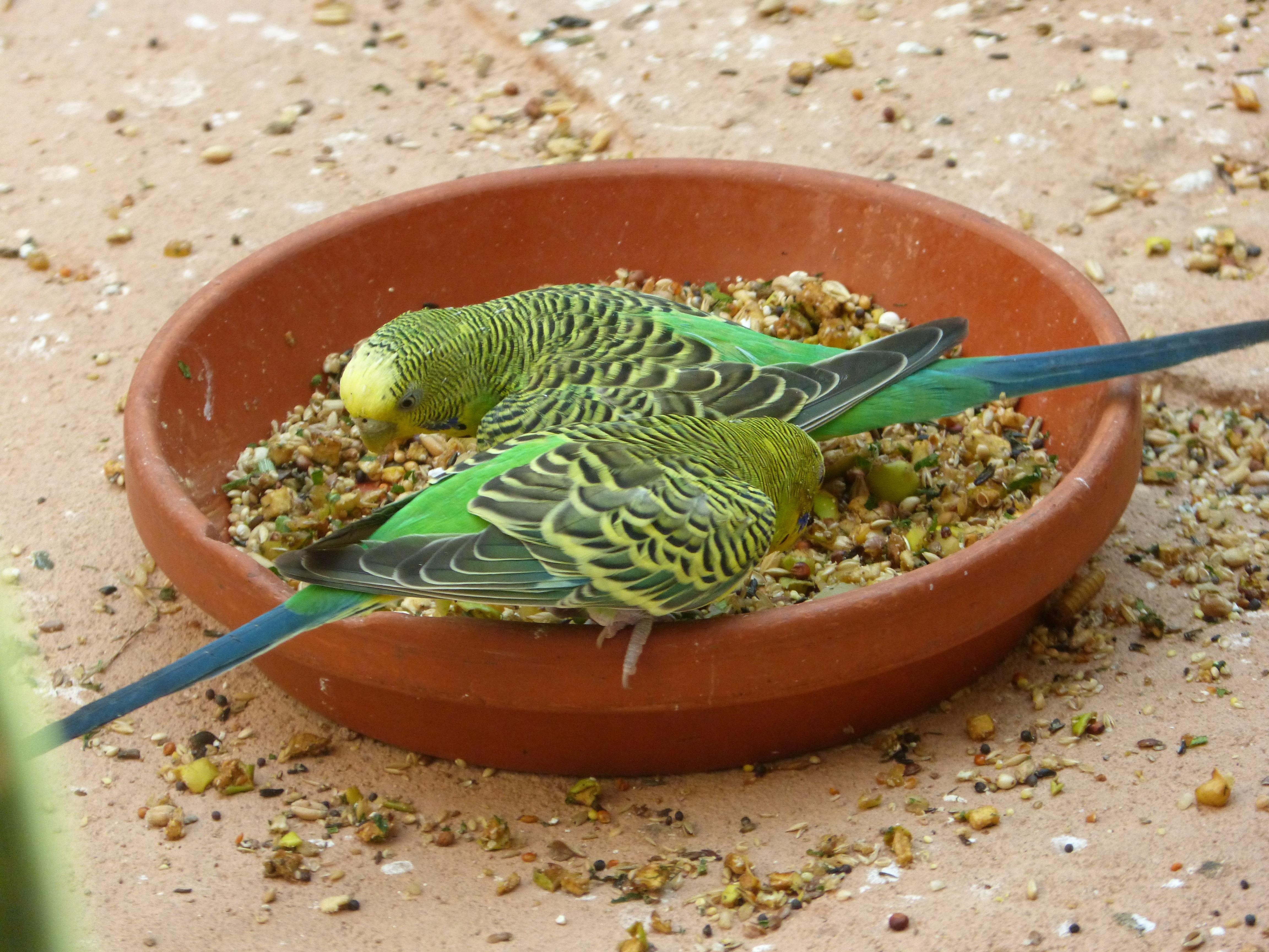 Gambar Kebun Binatang Makanan Hijau Menghasilkan Warna