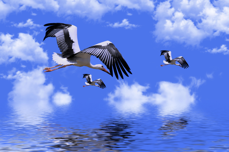 9800 Gambar Hewan Burung Bangau Terbaru