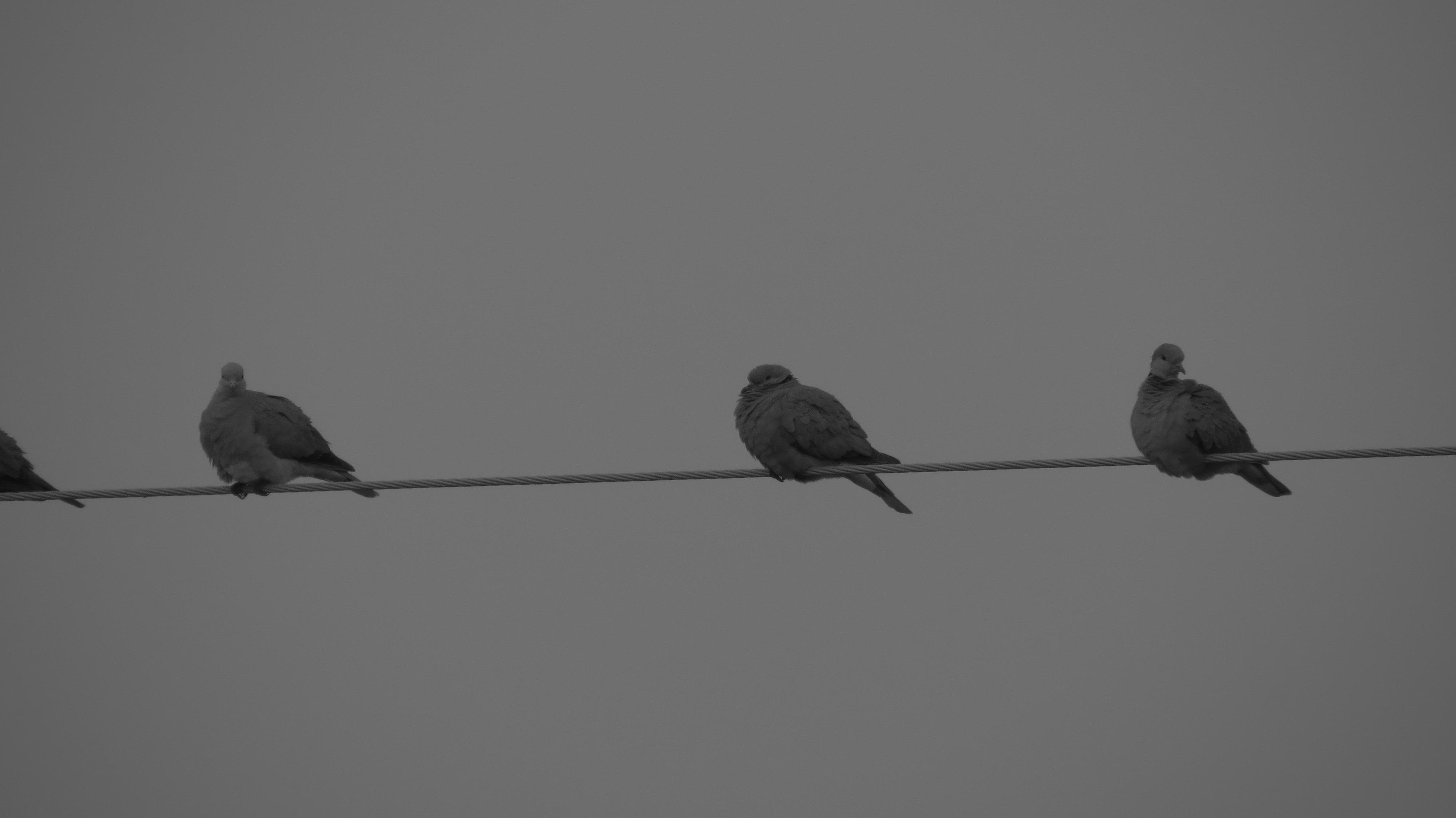 Bkack vtáky
