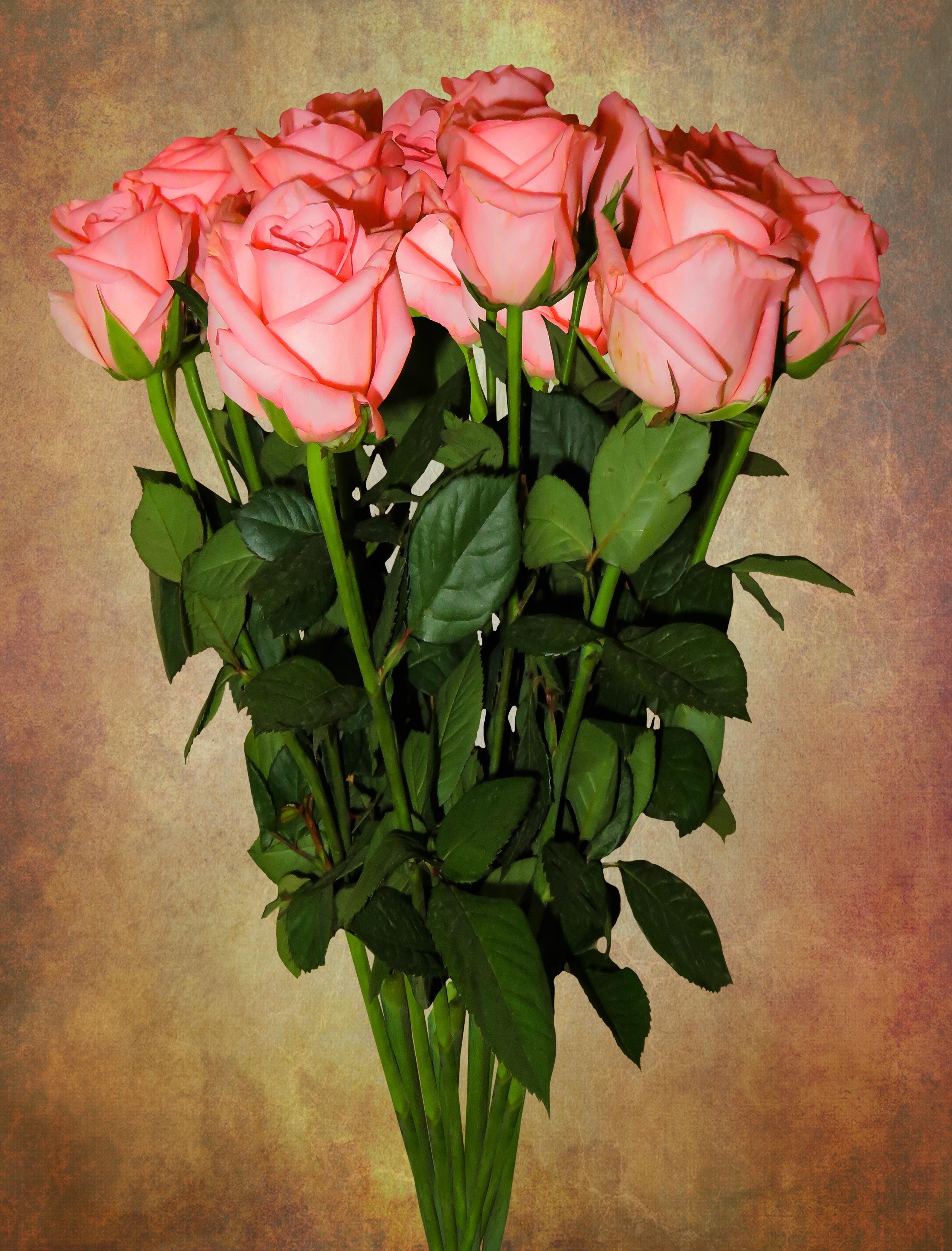Geburtstagstrauß Geburtstag Strauß Blumen Rosen Hochzeitsstrauß Valentinstag  Blühen Blühen Rosa Glückwünsche Rosenstrauß Dekoration Rose Blühen Liebe