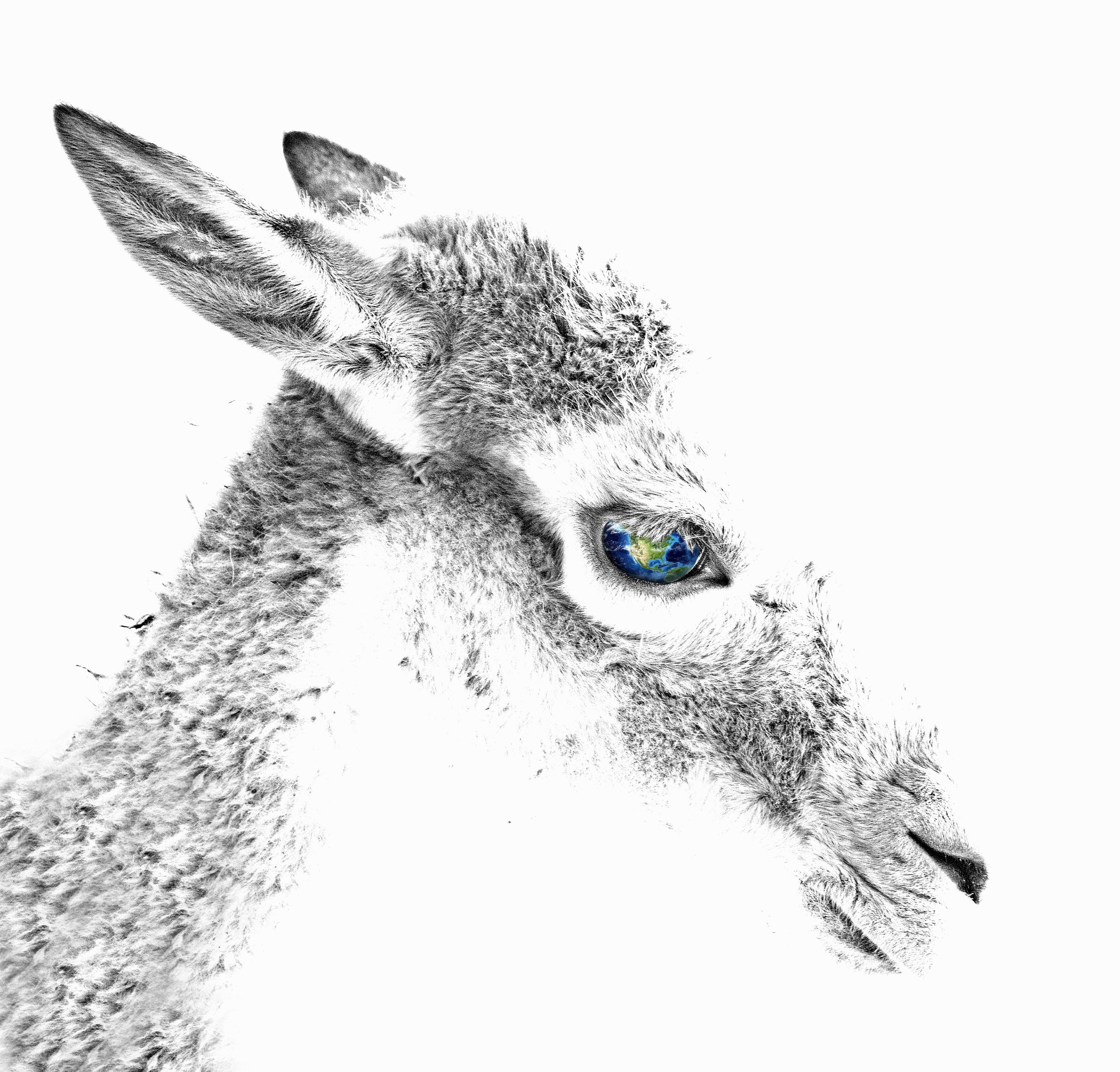 9200 Koleksi Gambar Kebun Binatang Kartun Hitam Putih Terbaru