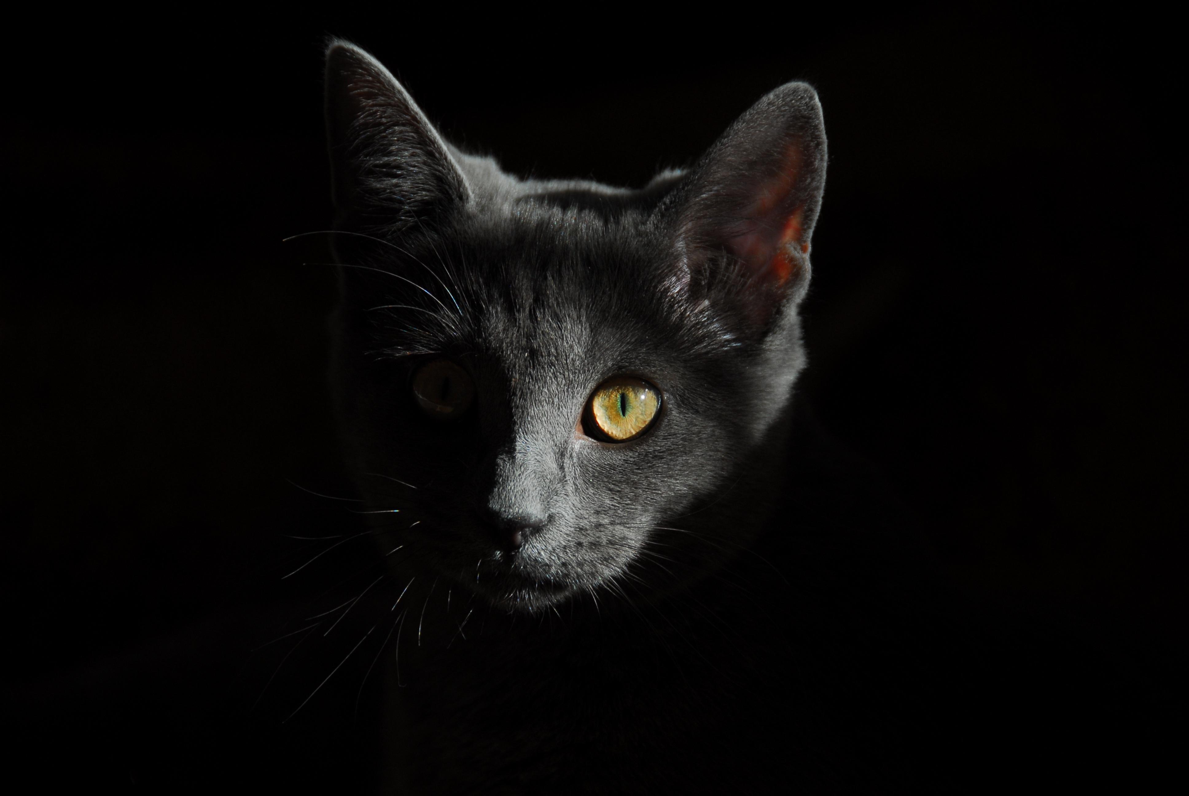 Gratis svart pussys