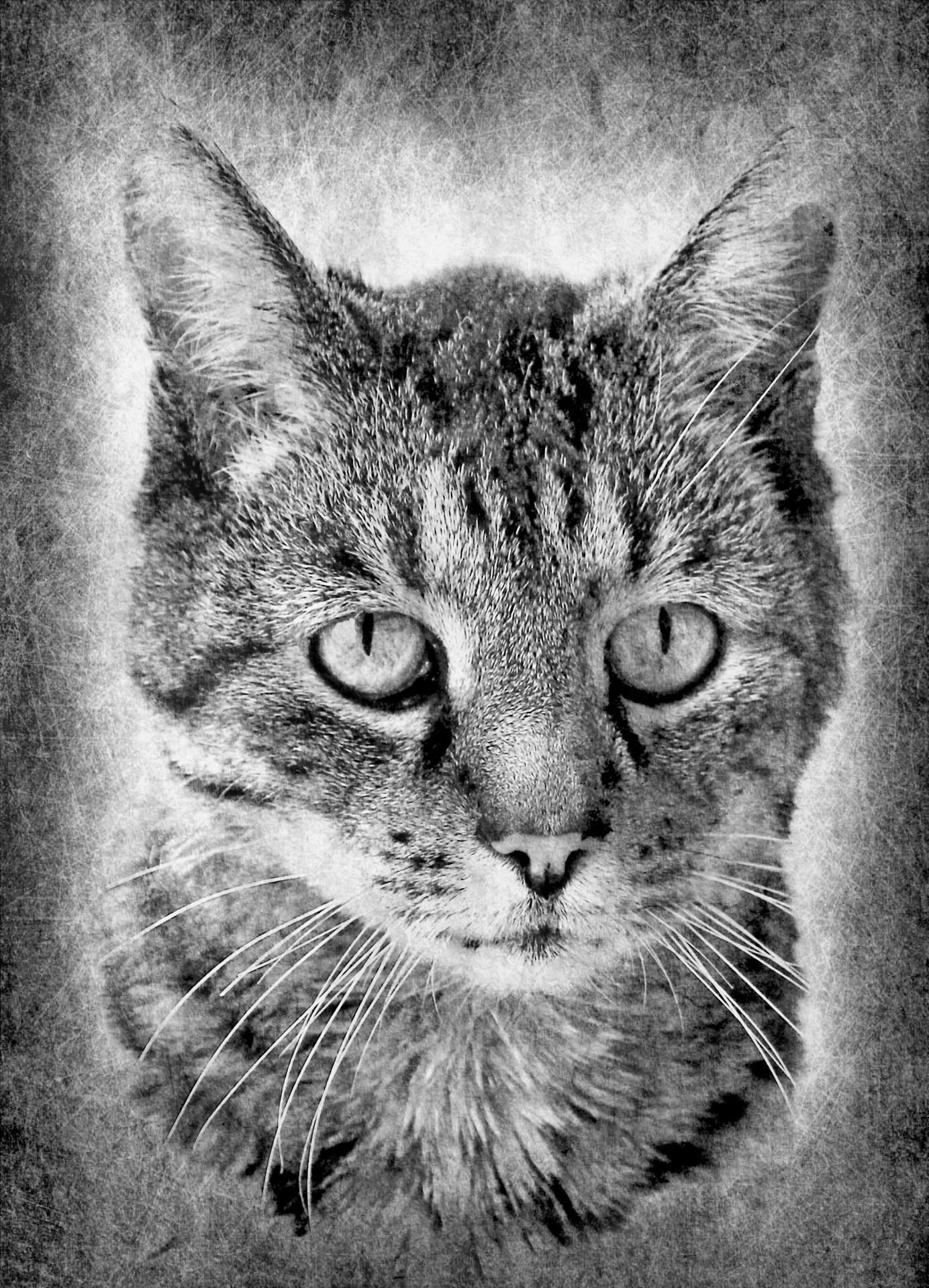 Fotos gratis  en blanco y negro monocromo fauna Blanco negro