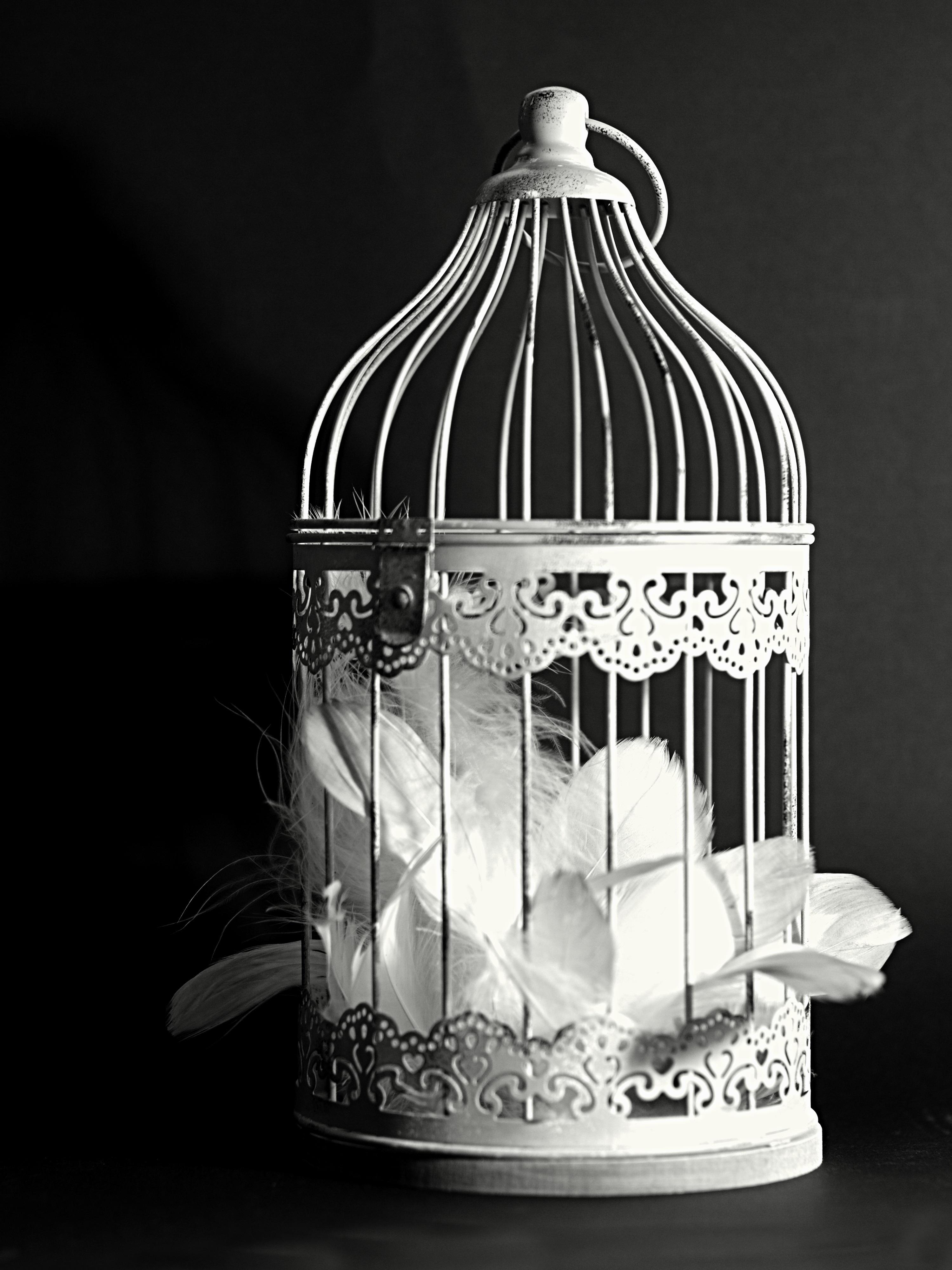 Stilig Bildet : svart og hvit, dekorasjon, lykt, lampe, belysning, fjær TW-03