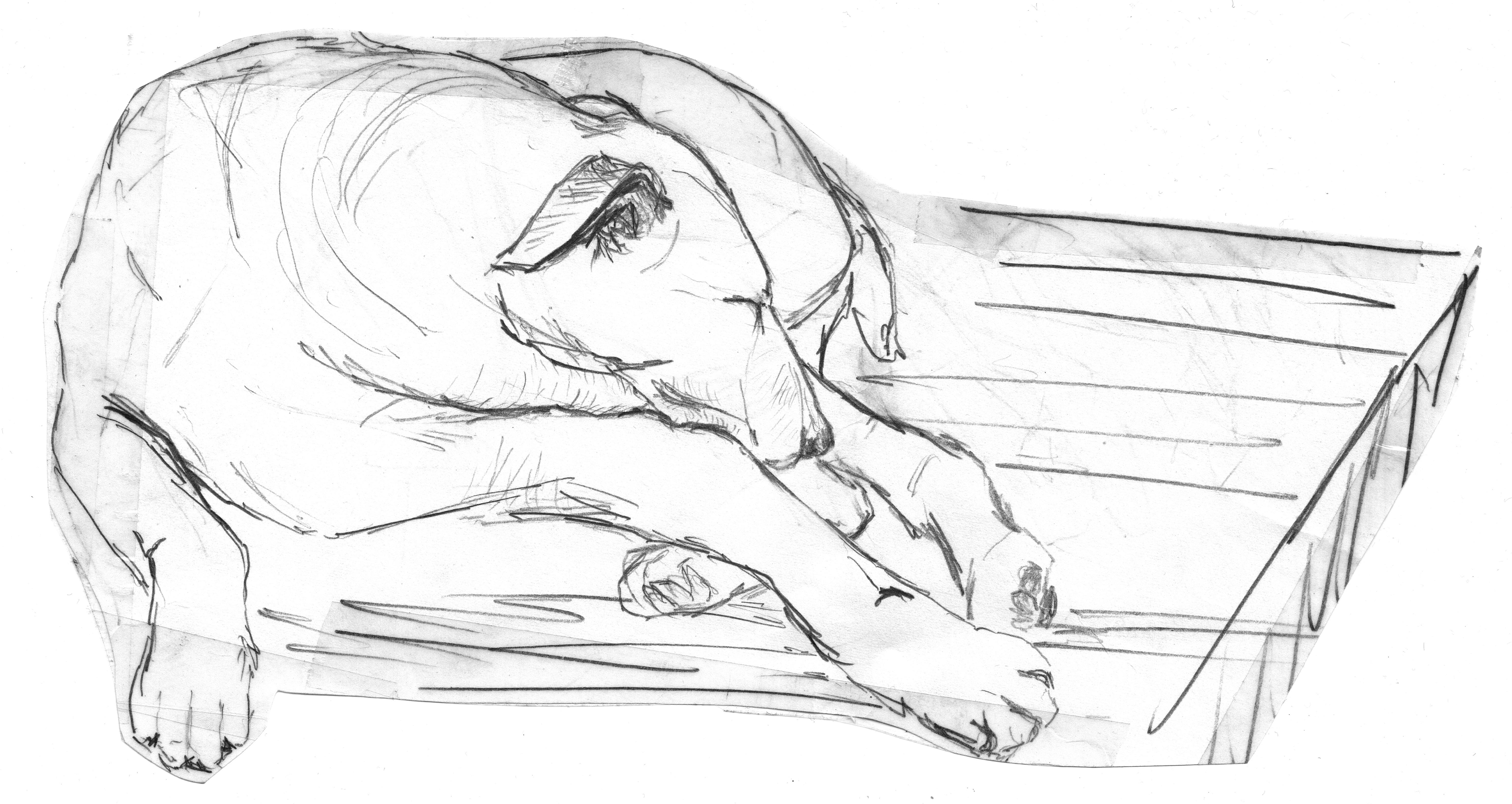 Black and white dog animal pet artwork sleep sketch drawing illustration lying pencil drawing doze sleeping