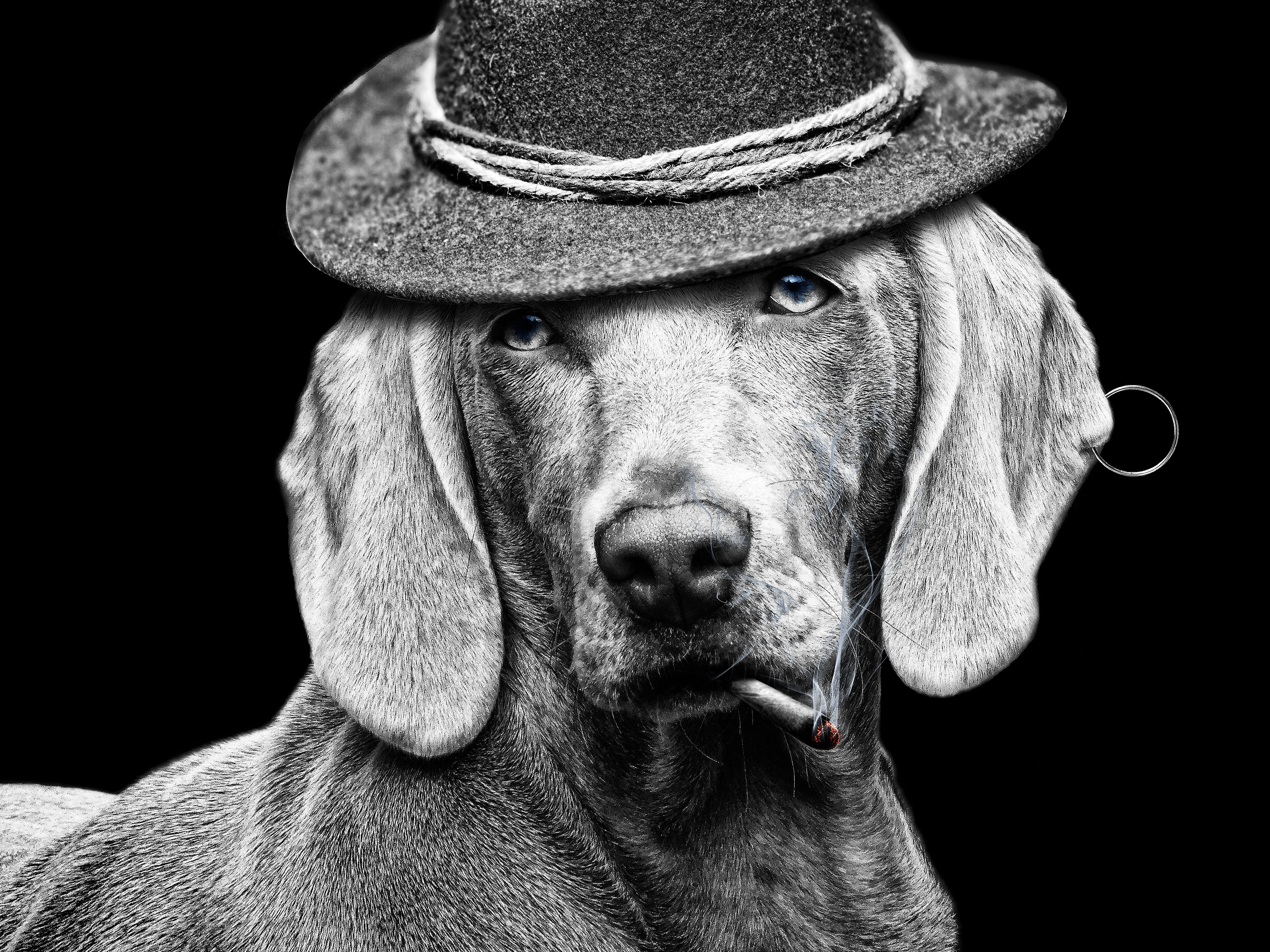 Картинки собака с сигаретой