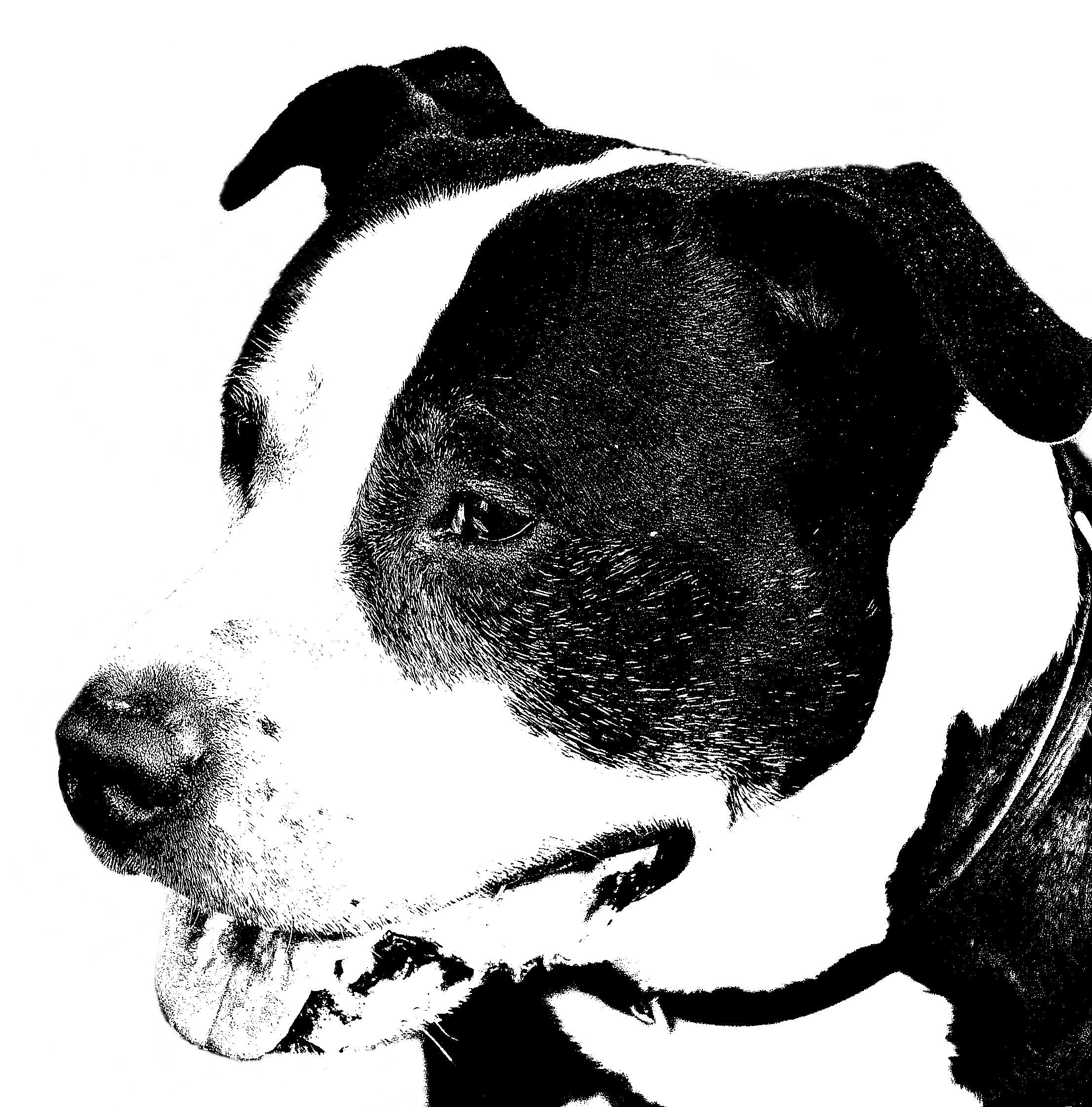 Fotos Gratis En Blanco Y Negro Perro Retrato Monocromo