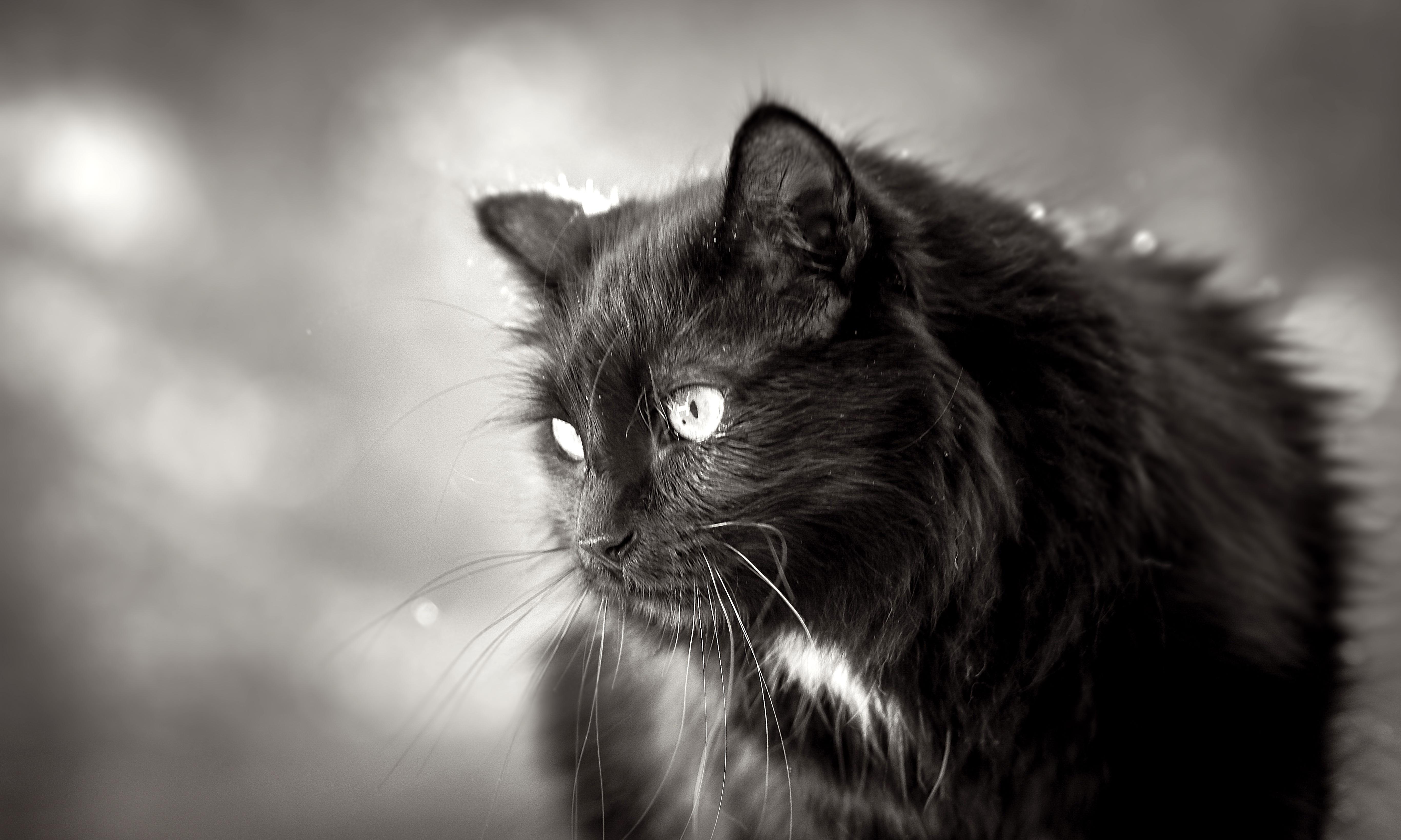 fekete cicák punci tajvani szex masszázs