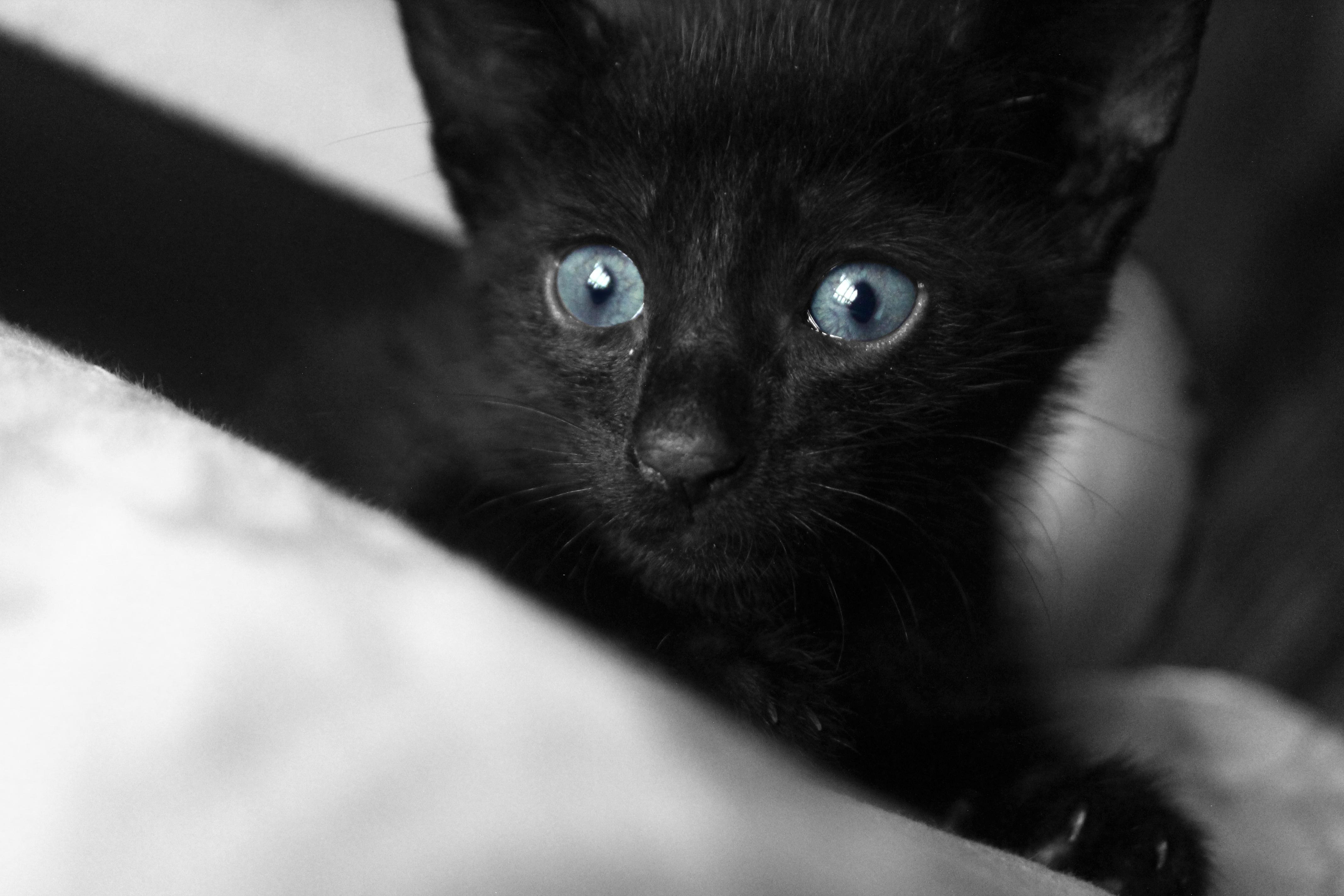 biela mačička alebo čierna mačička čierna žena biely muž majúce sex