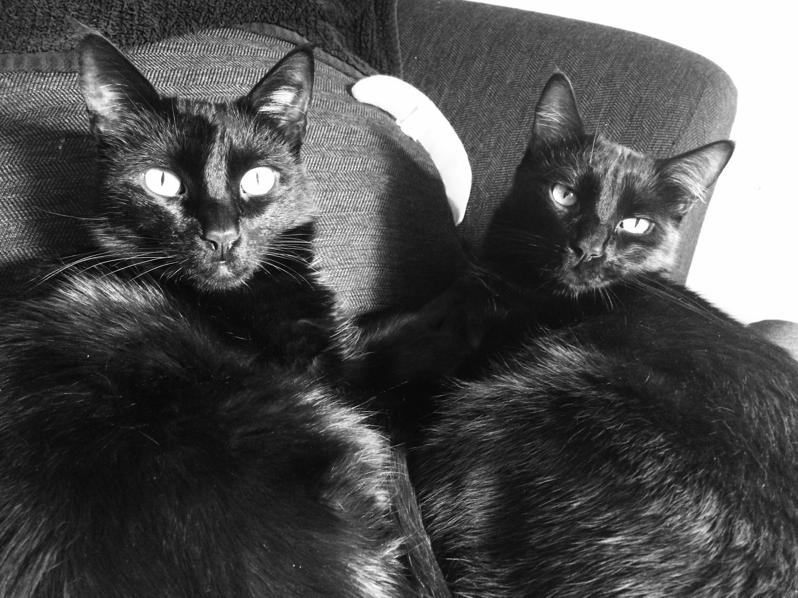 Exkluzívne čierna mačička