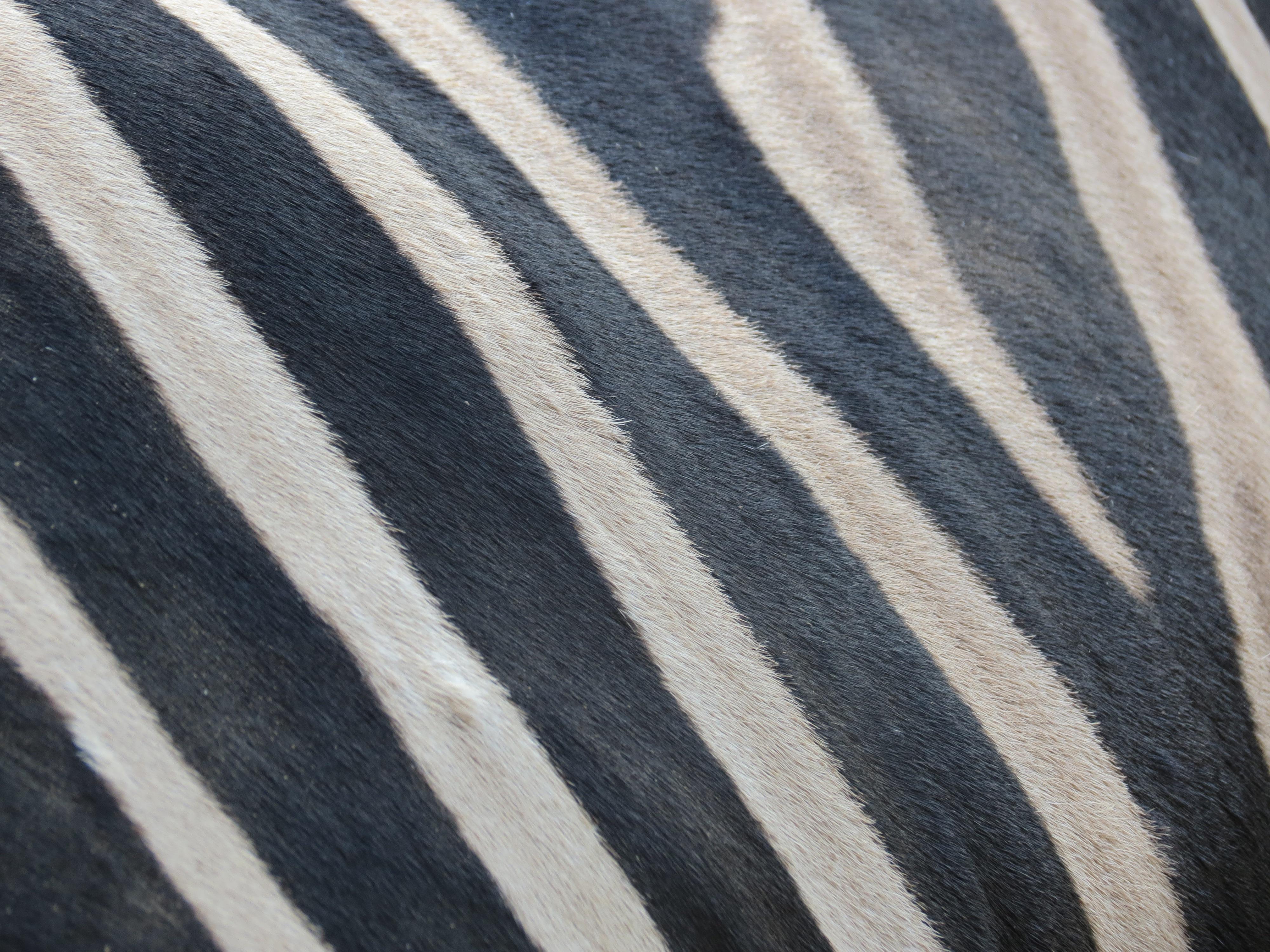 Kostenlose foto : Schwarz und weiß, Muster, Linie, braun, schwarz ...