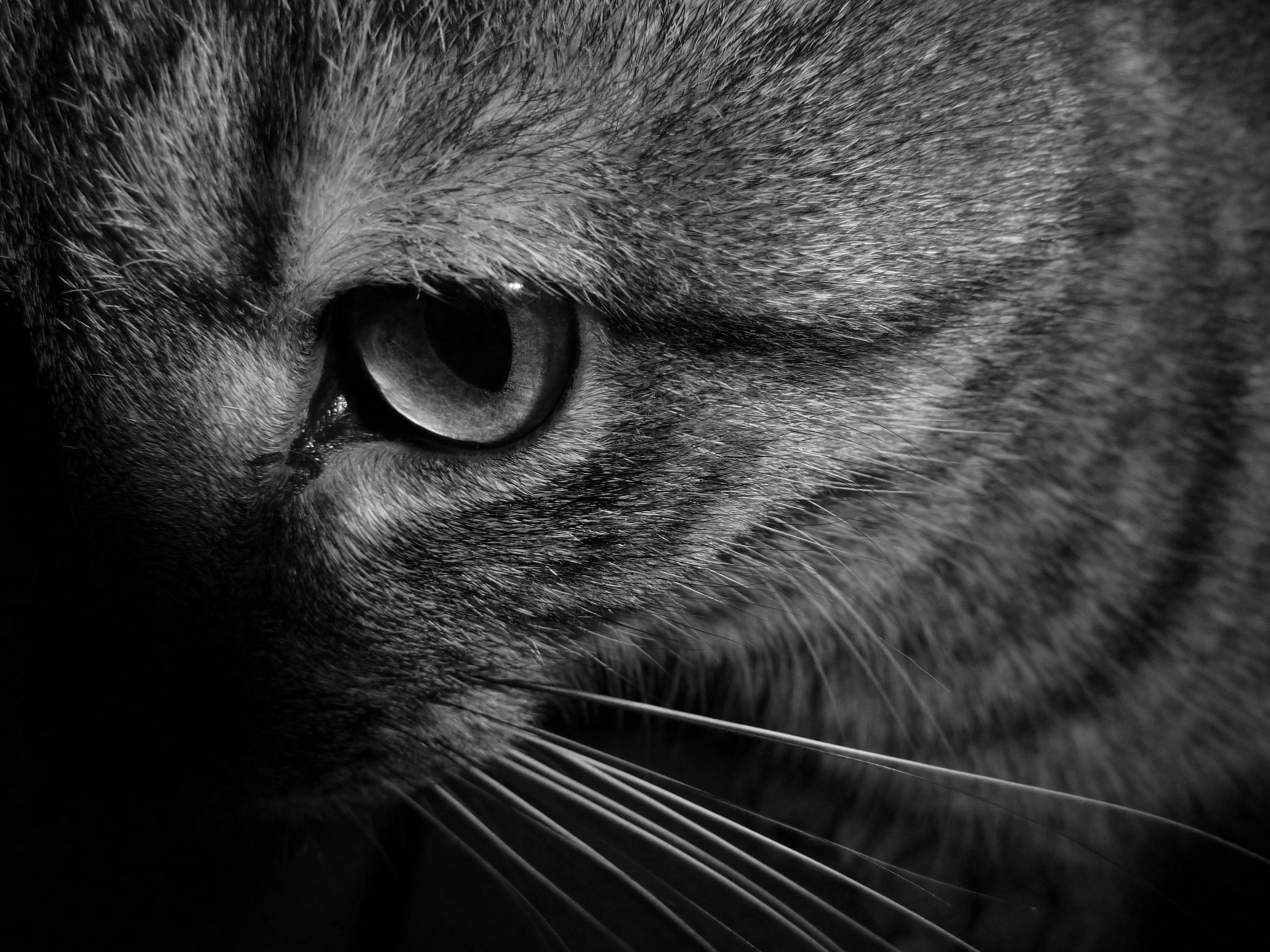 noir chatte téléchargements dormir anal creampie