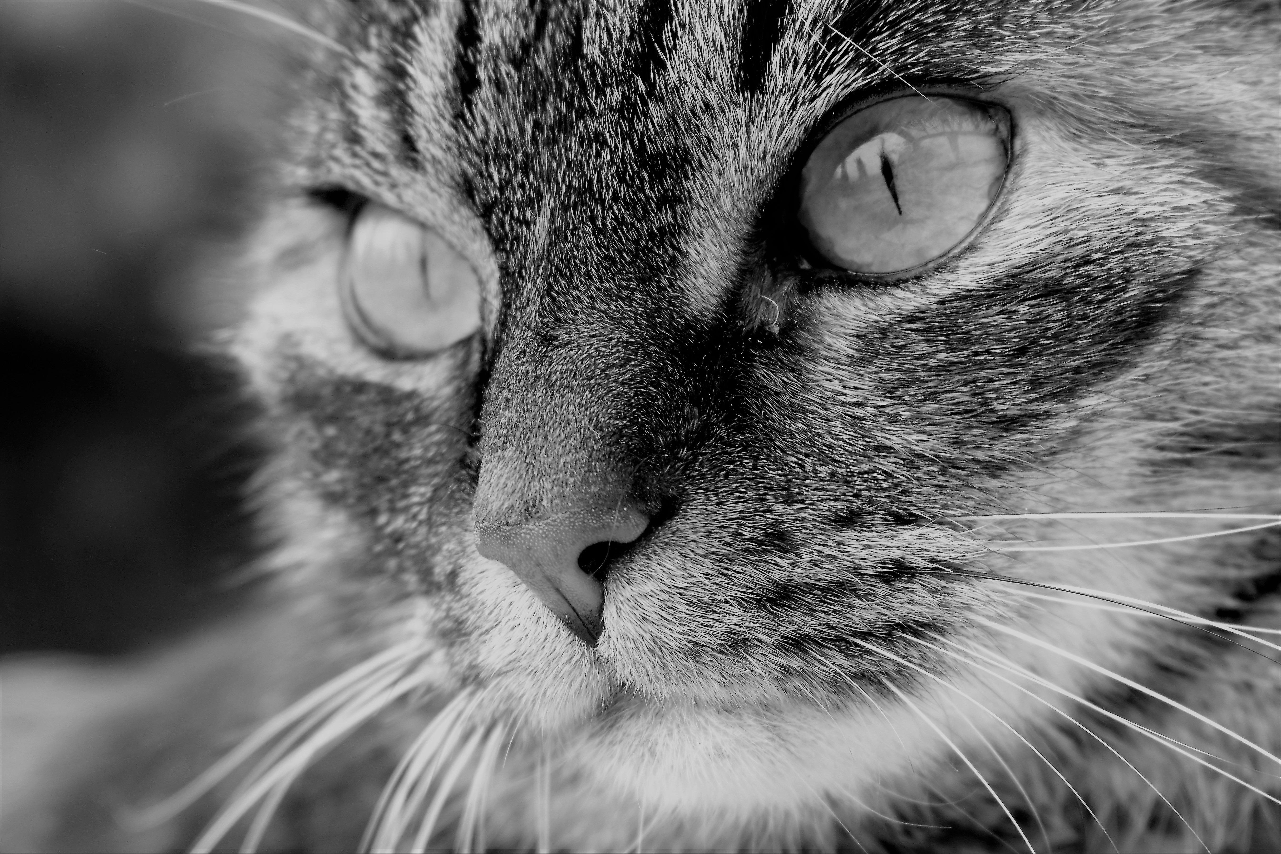 94 Koleksi Gambar Binatang Kumis Kucing Gratis