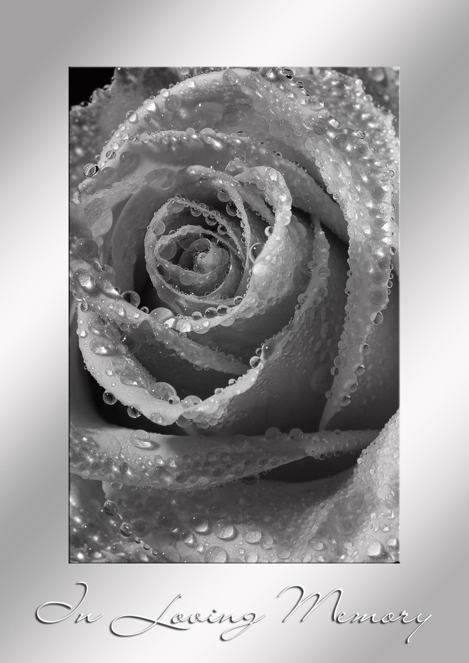 images gratuites noir et blanc la photographie fleur p tale rose m moire monochrome. Black Bedroom Furniture Sets. Home Design Ideas