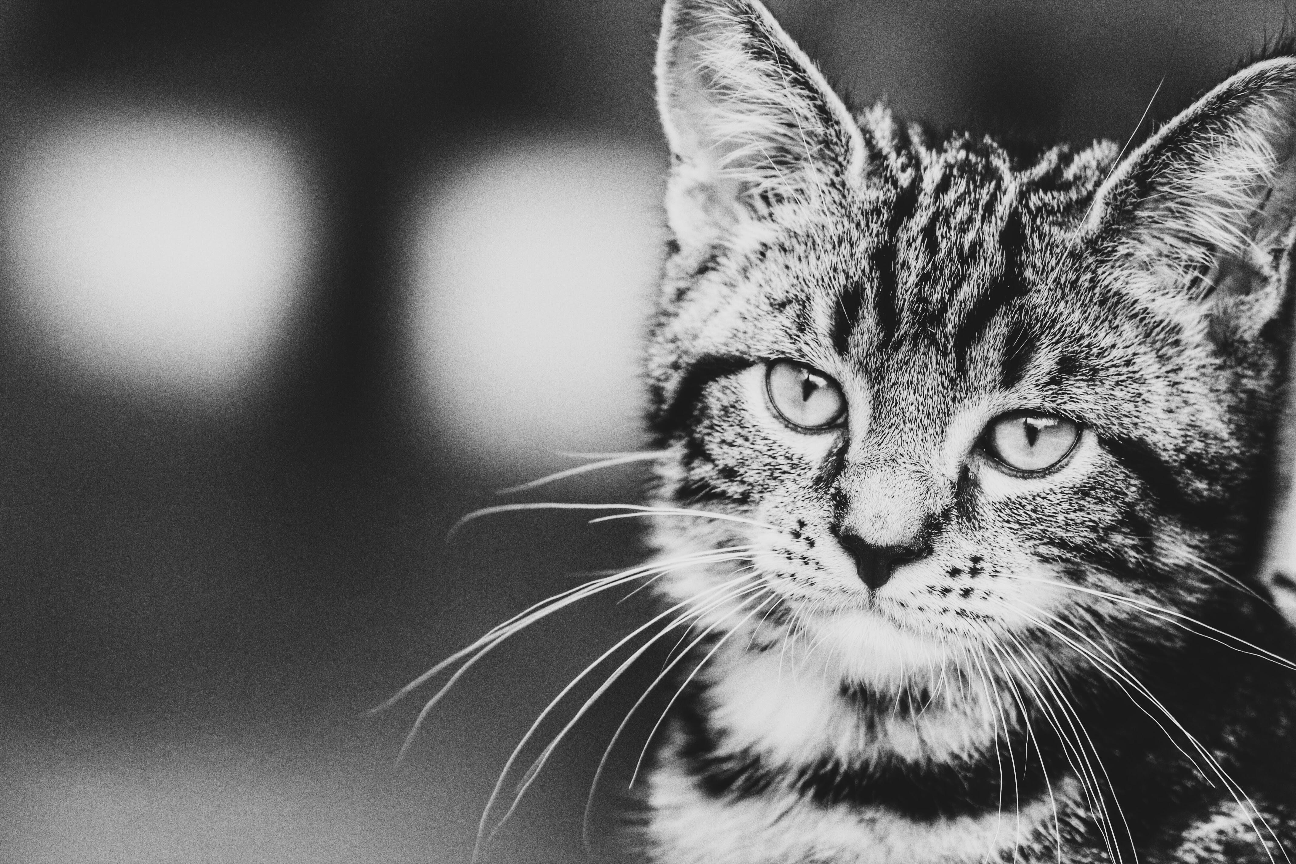 Images Gratuites Noir Et Blanc La Photographie Animal De