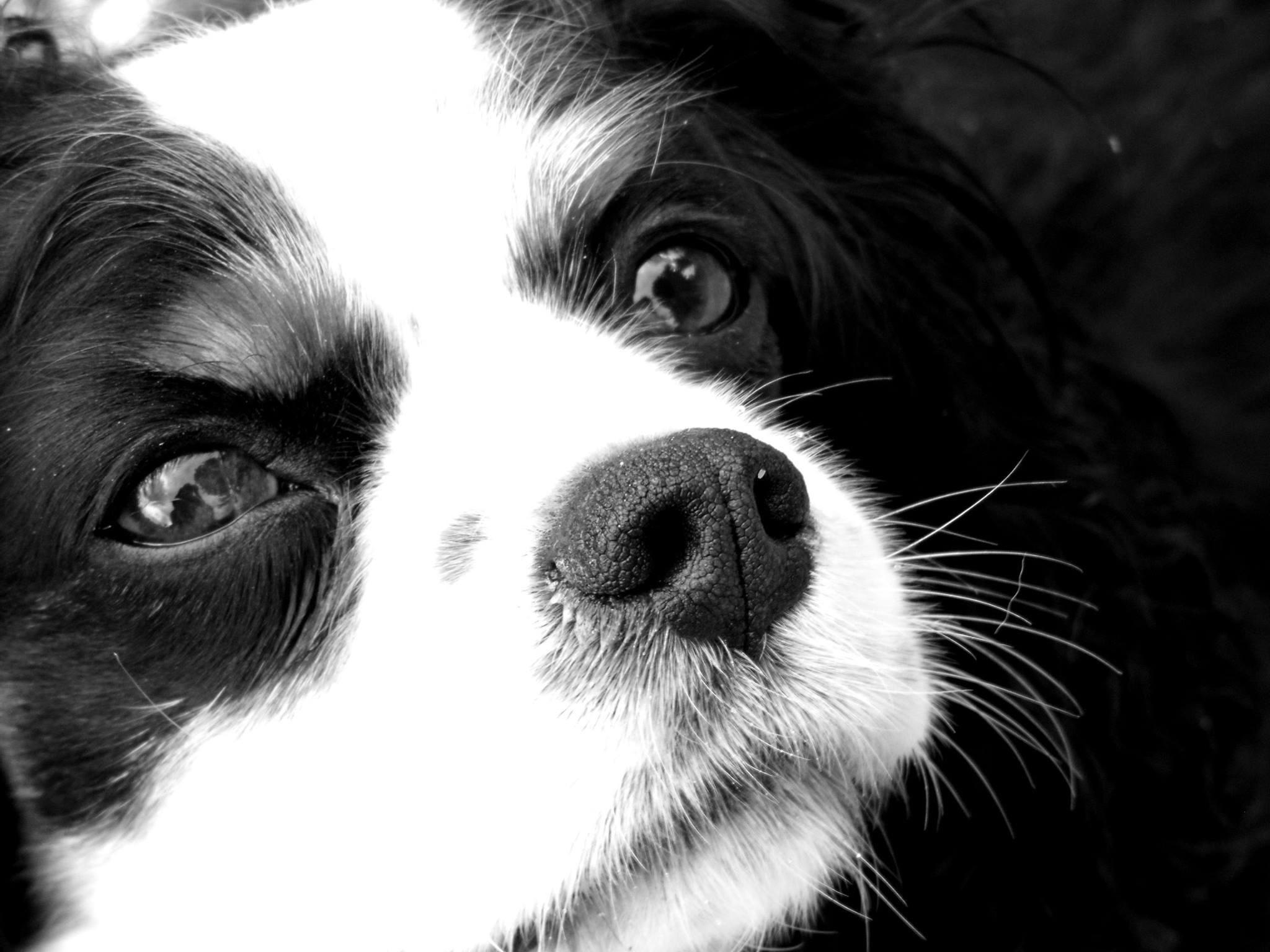 Fotos Gratis En Blanco Y Negro Fotografía Perrito Perro Linda