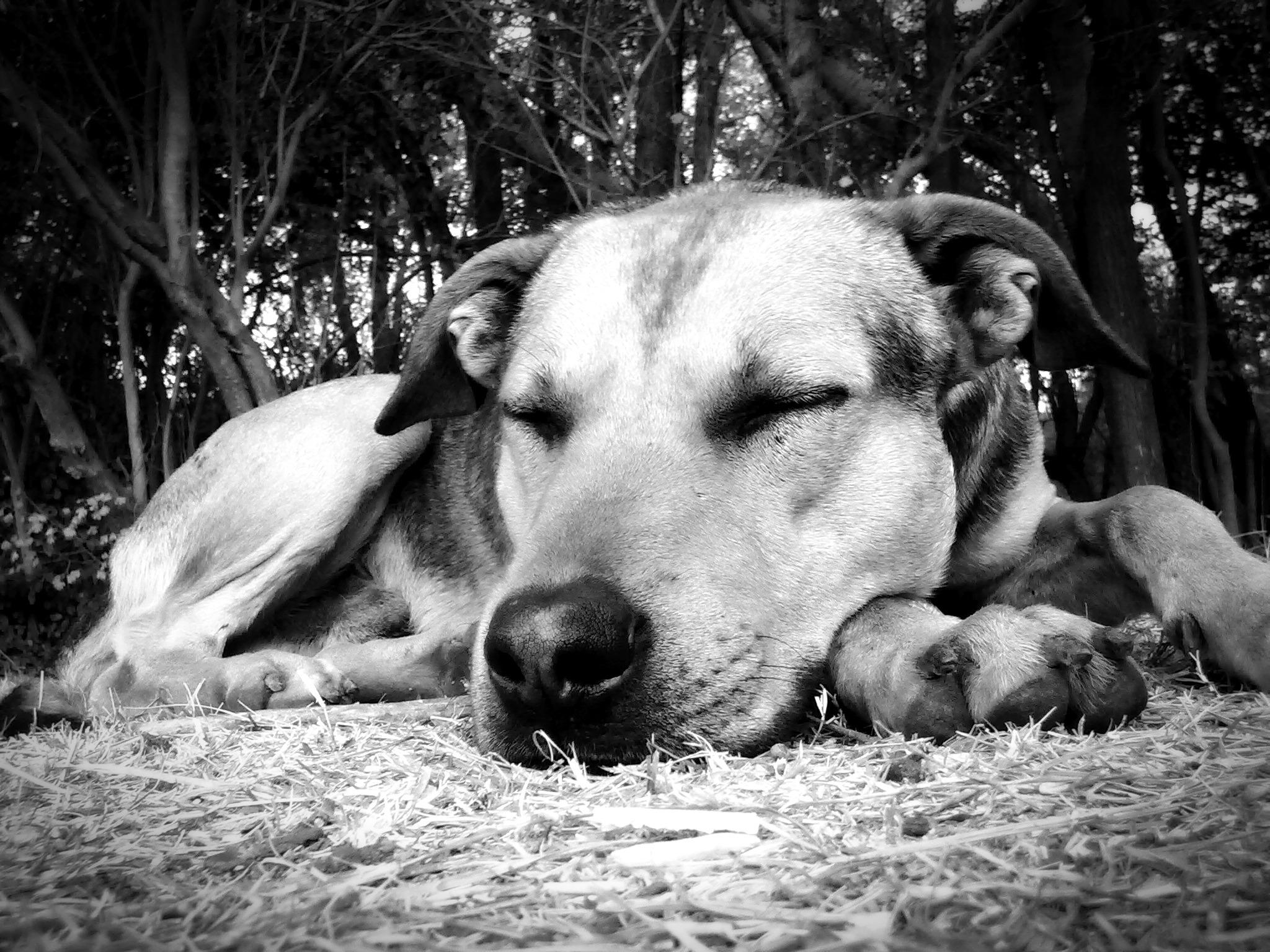 Uykunun anlamı: ısırır ya da oynayan köpek nedir