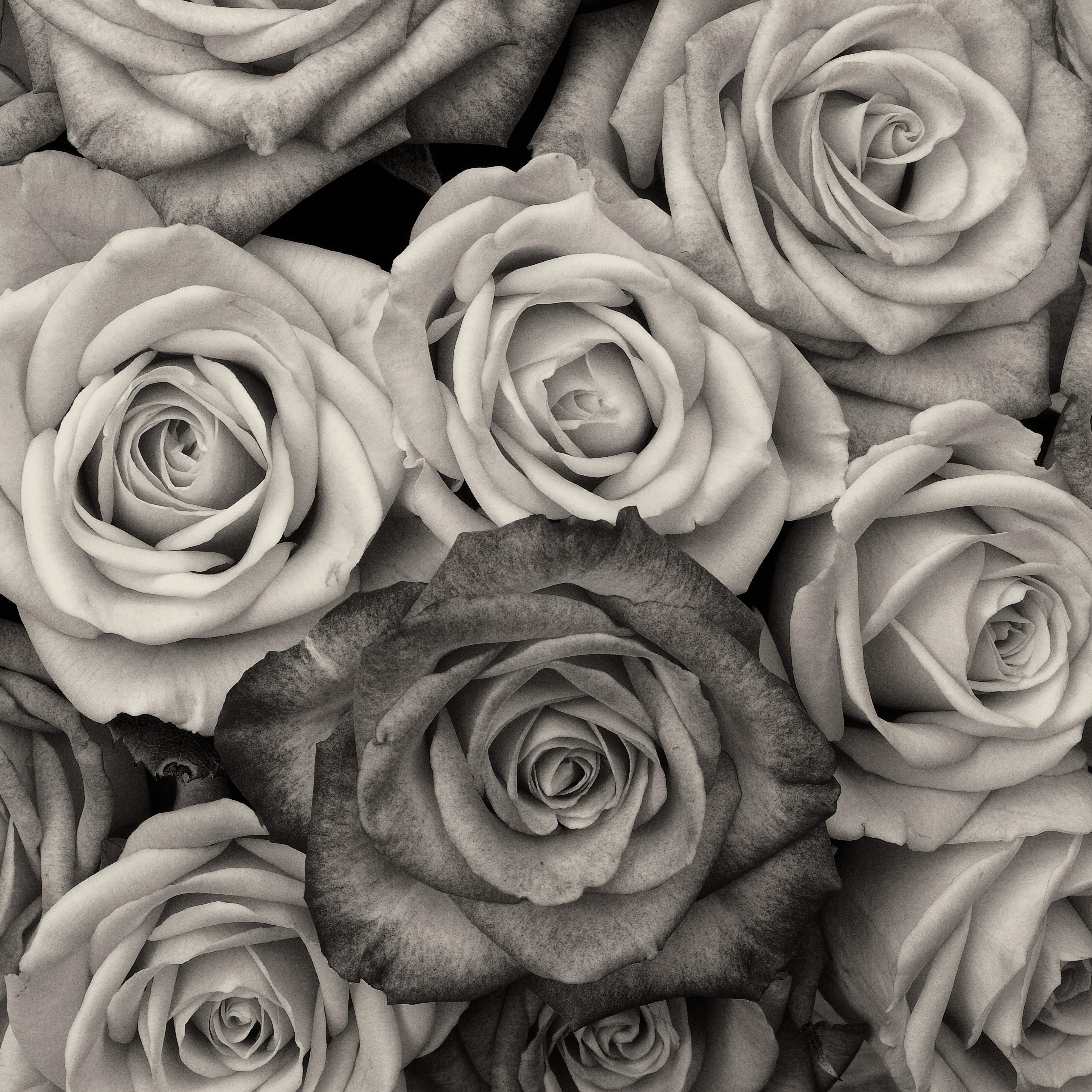 Free Images Black And White Flower Petal Love Fine Art