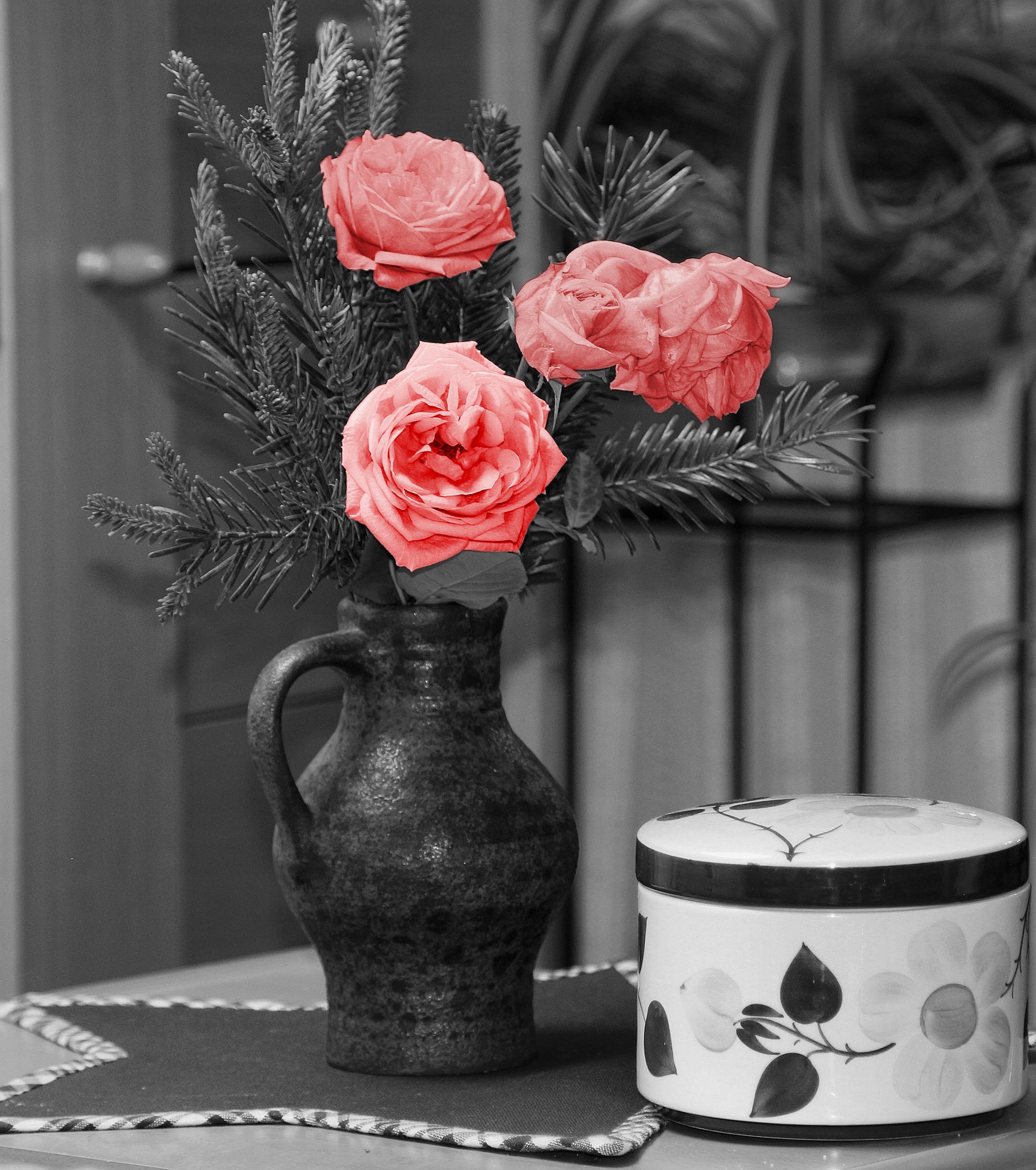 무료 이미지 : 검정색과 흰색, 식물, 화이트, 병 장식, 빨간, 검은 ...