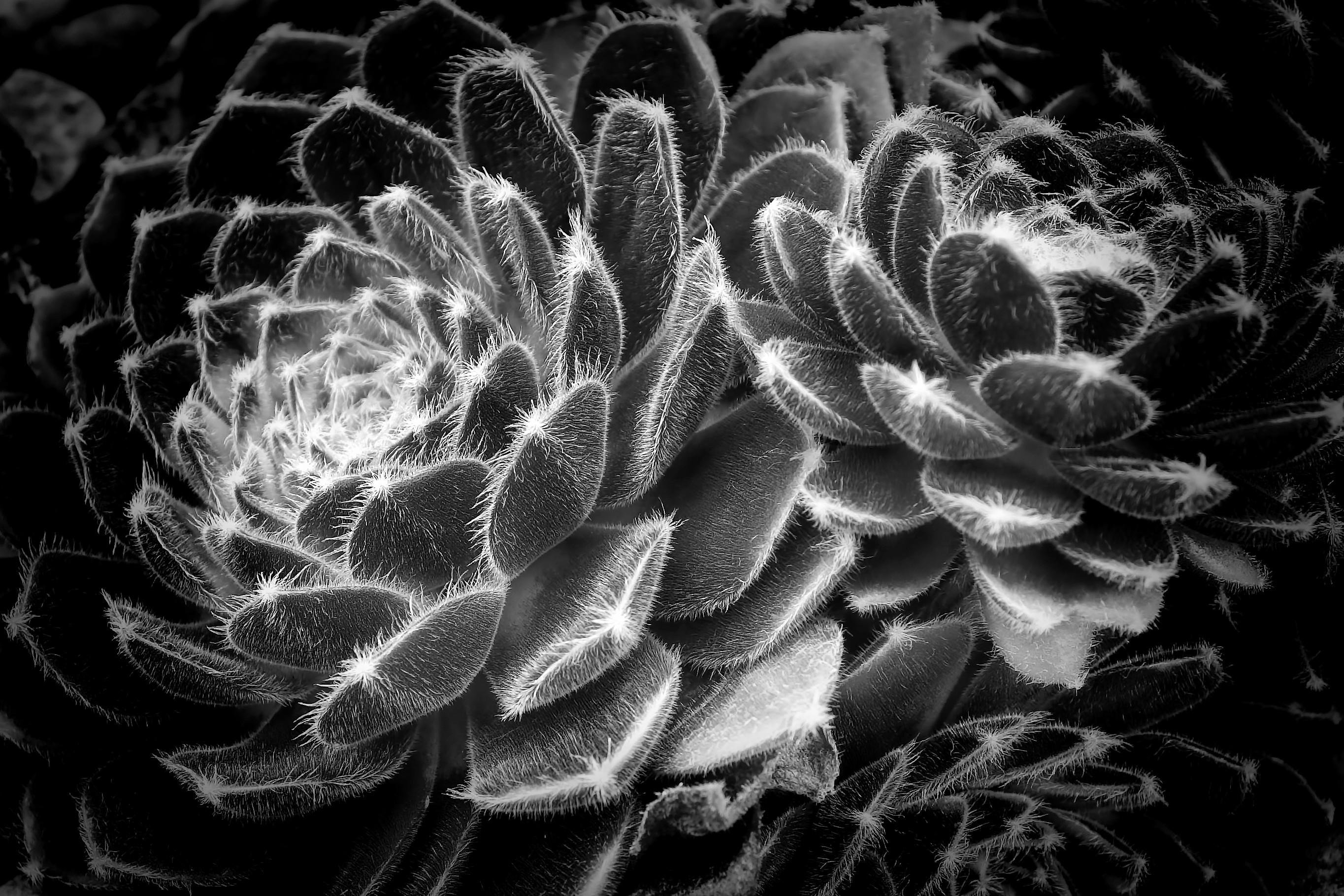 Images Gratuites Noir Et Blanc Plante La Photographie