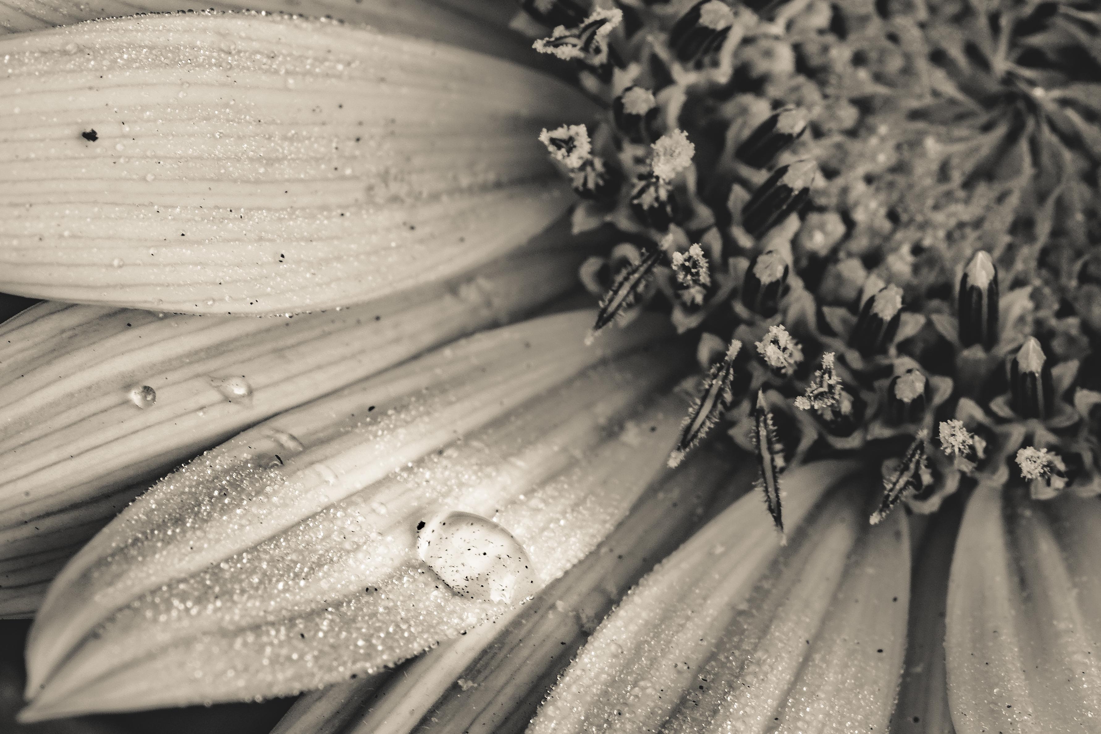 Gambar Hitam Dan Putih Menanam Kayu Daun Bunga Pola