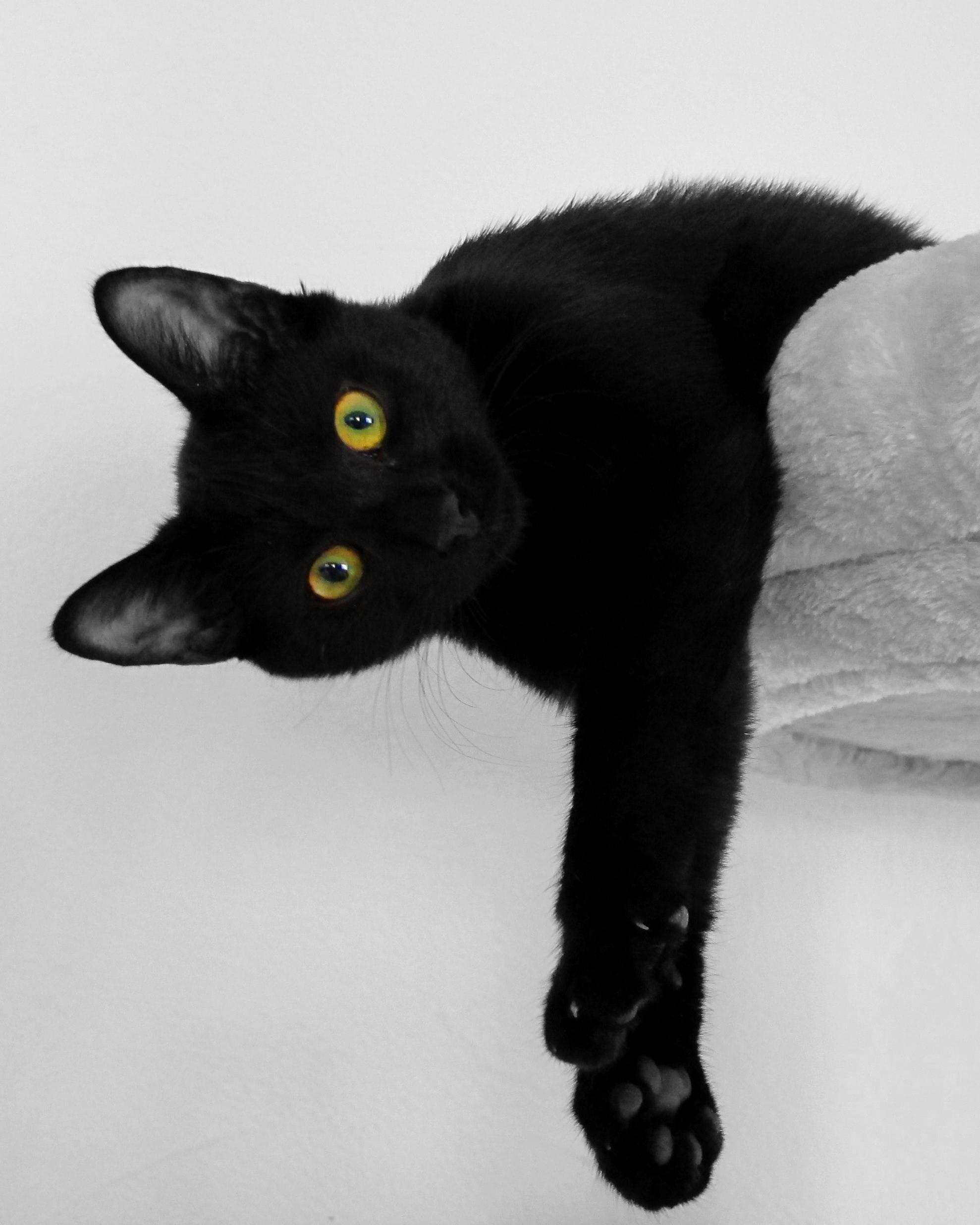 Zdarma sladká černá kočička