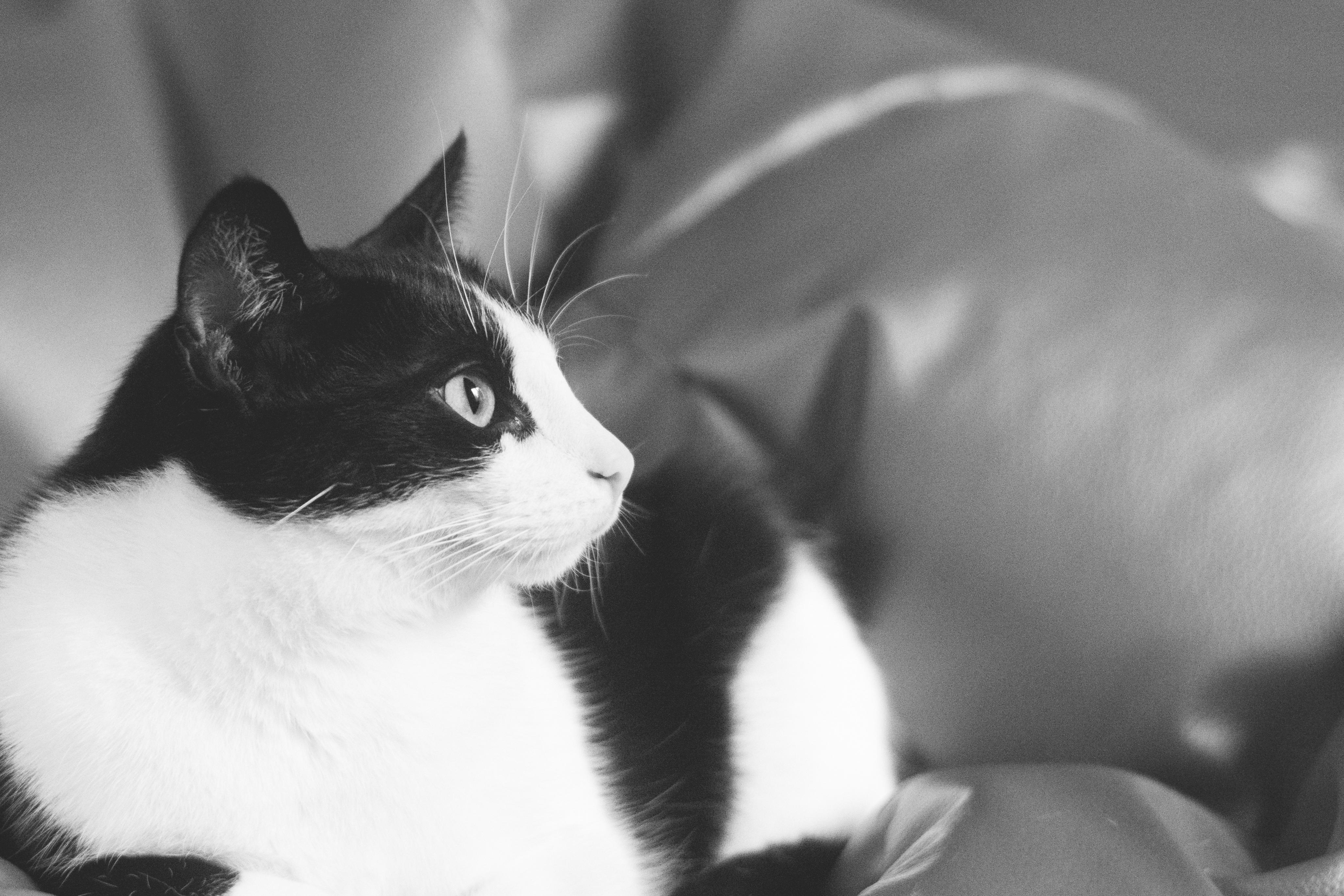 Черно белый кот смотреть бесплатно