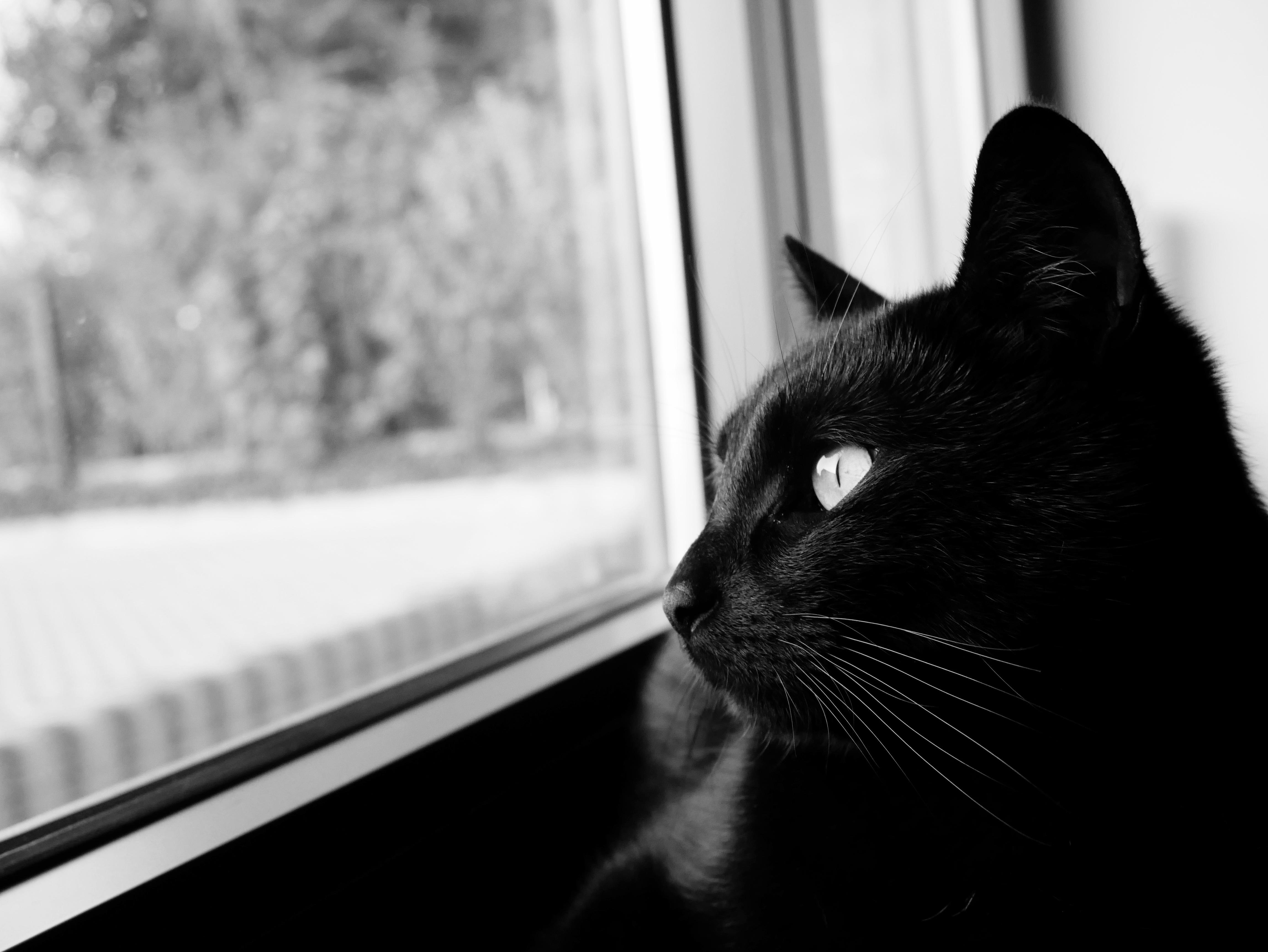 Черно белые картинки с ярким акцентом