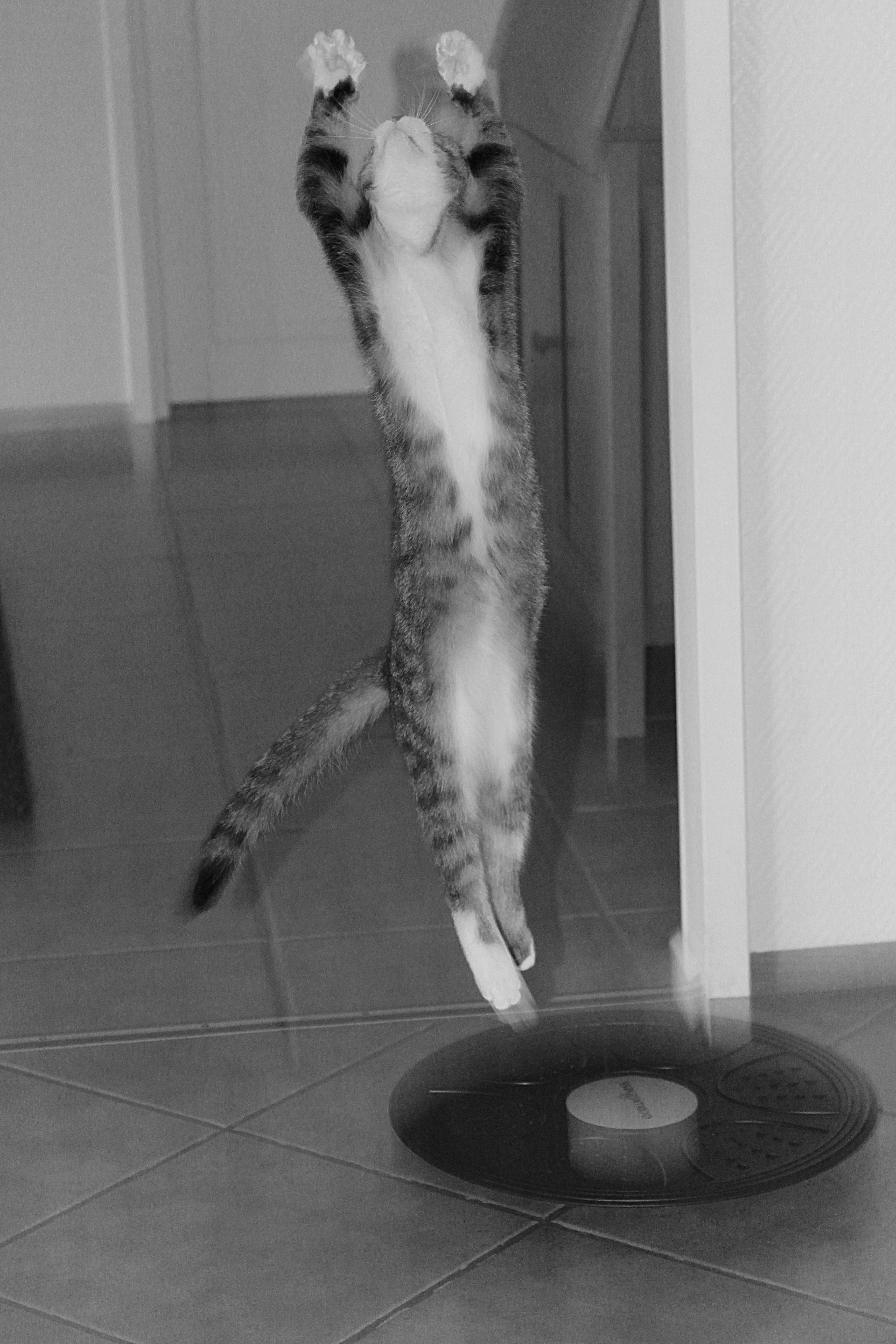Čierna na bielom mačička pics