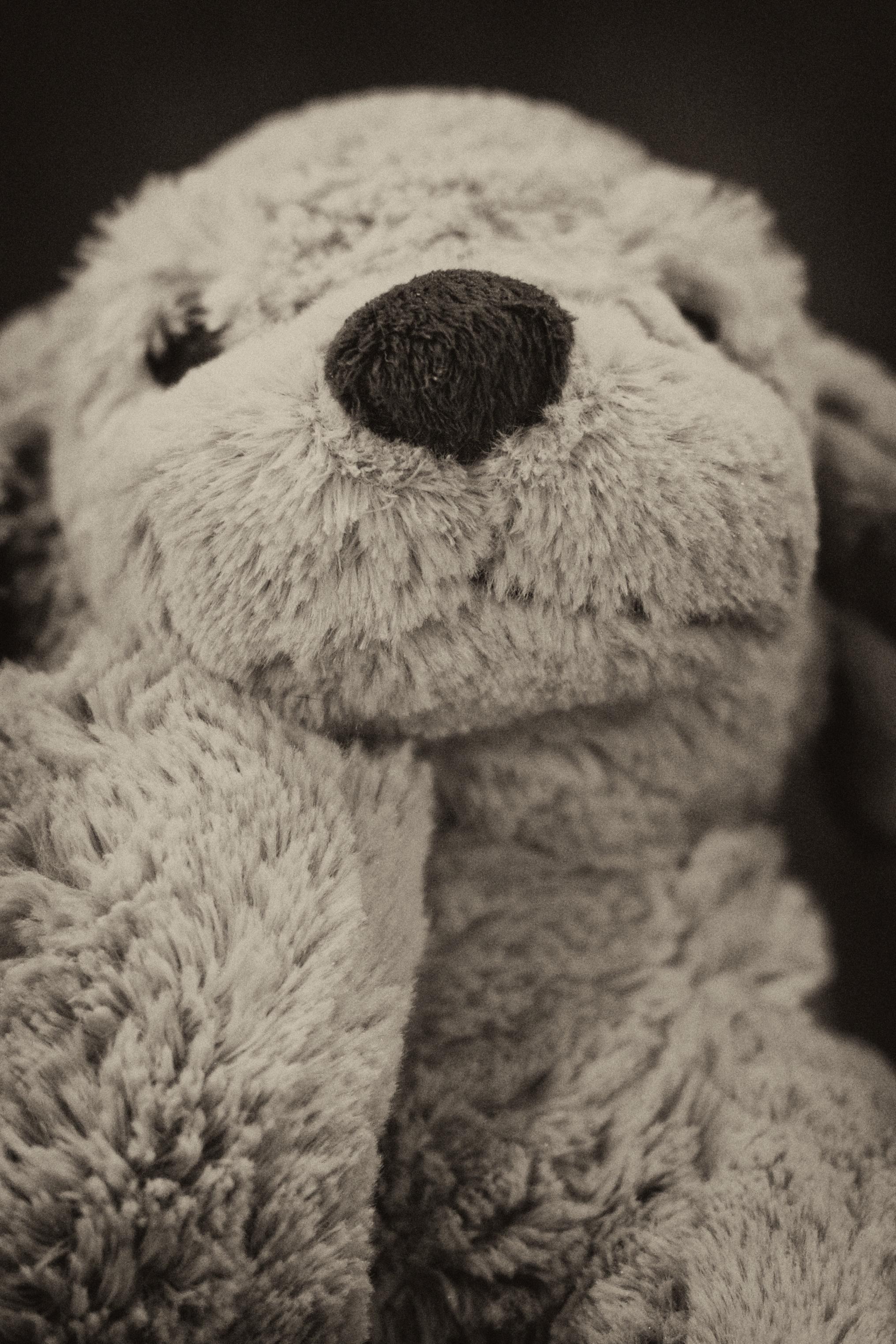 Kostenlose foto : Schwarz und weiß, Weiß, Pelz, Säugetier, einfarbig ...