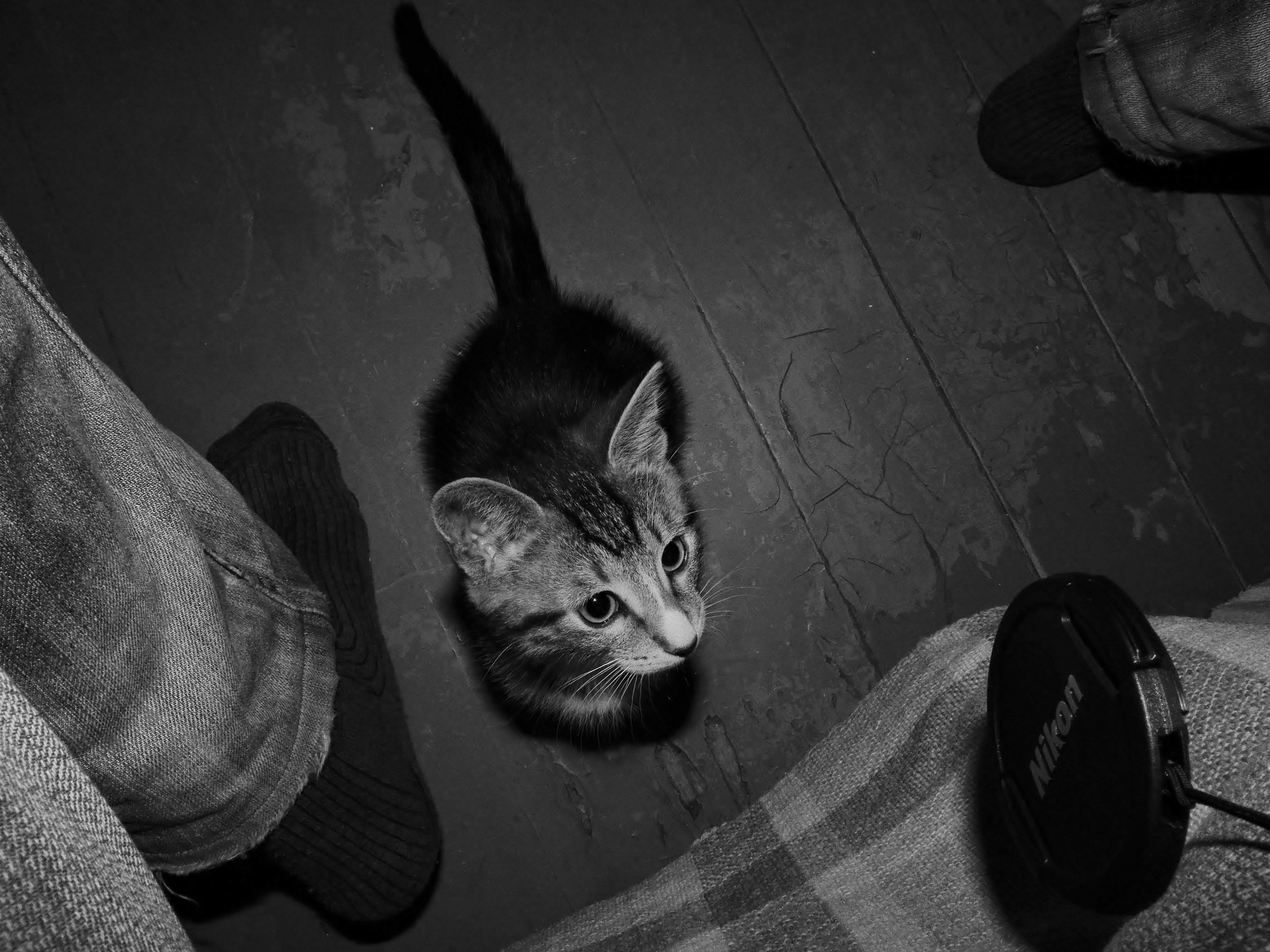 Игры коты чёрный и белый