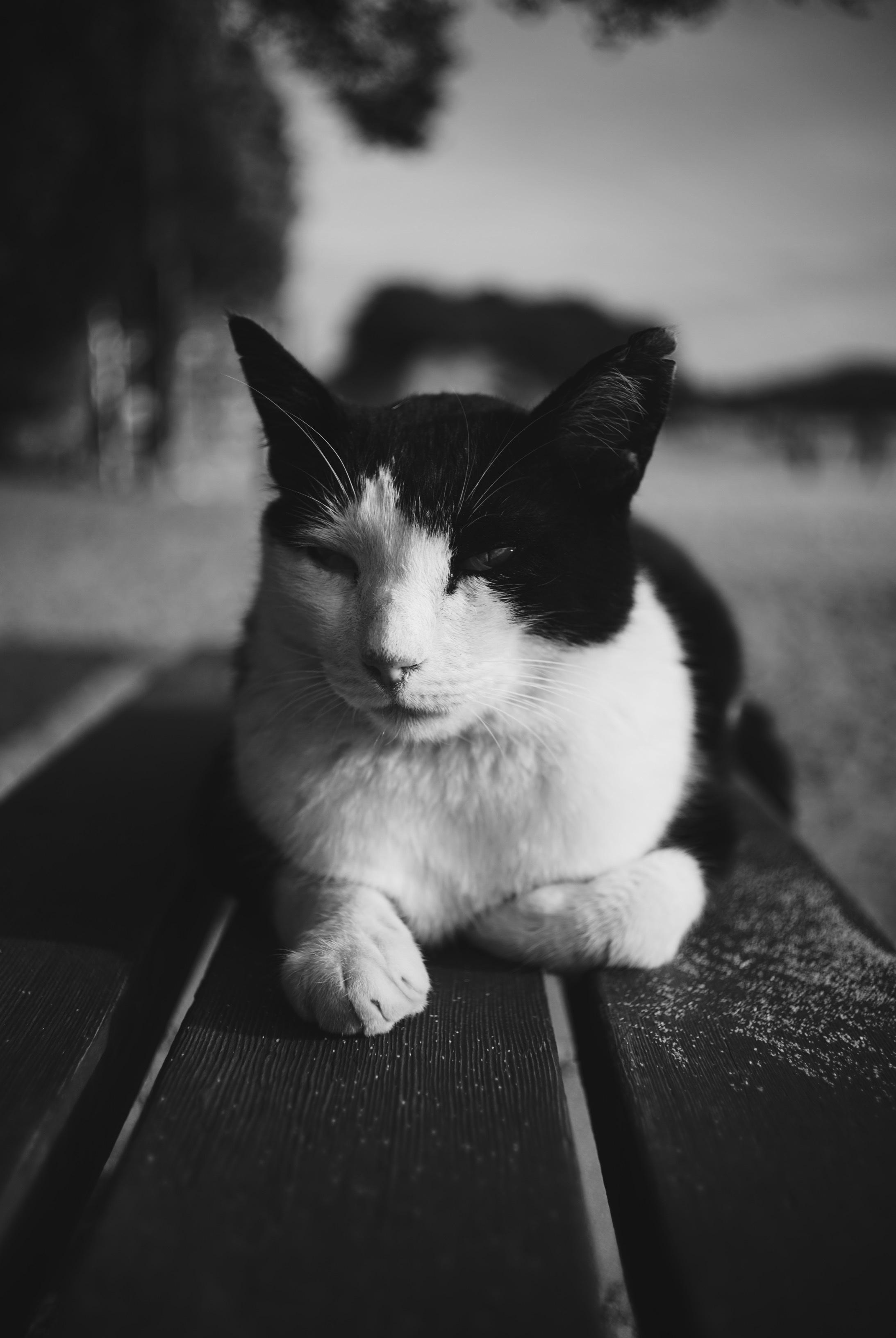 www zadarmo čierna mačička pics com veľký čierny kohút biele dievča