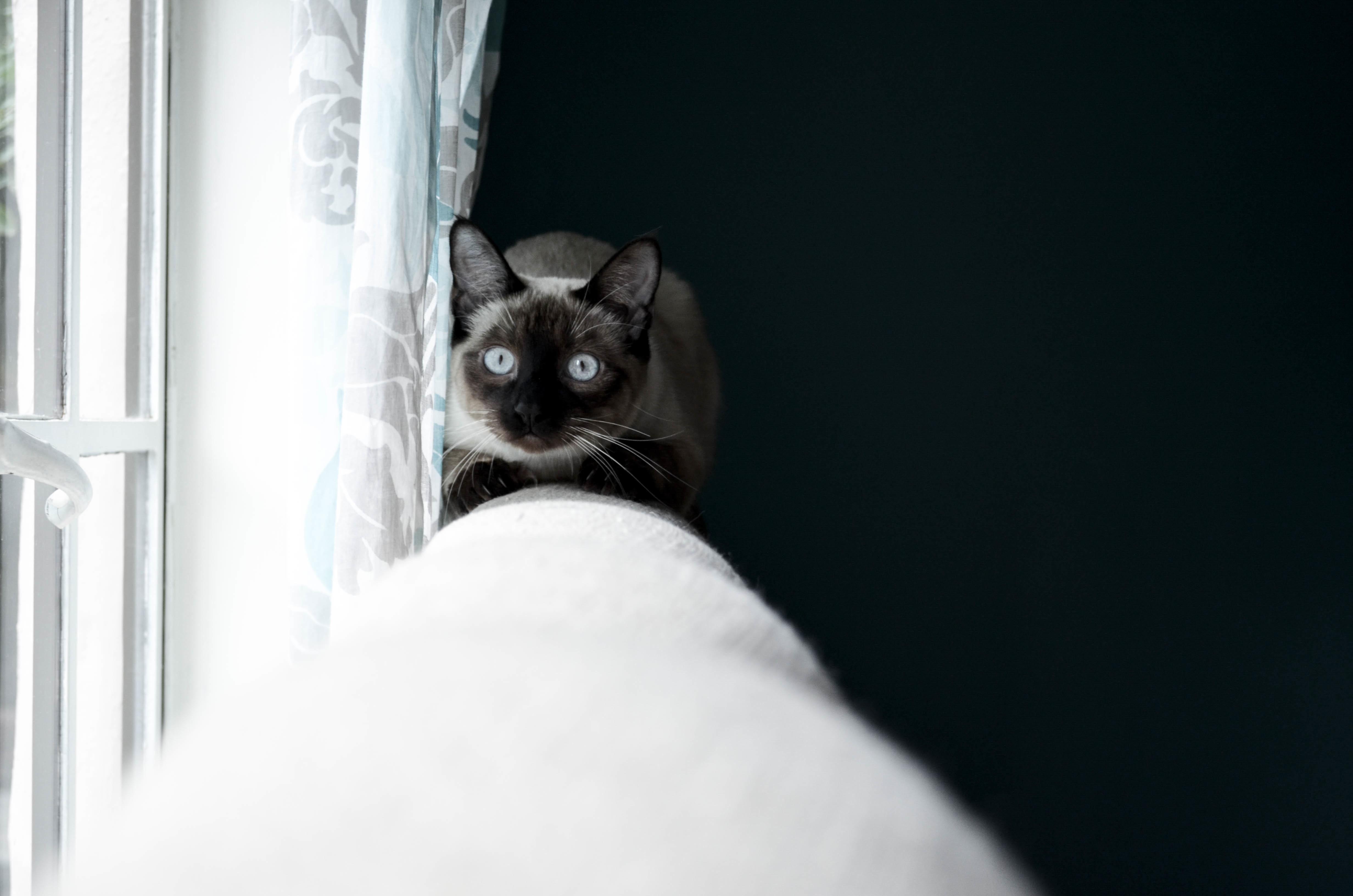 mačička čiernych ľudí