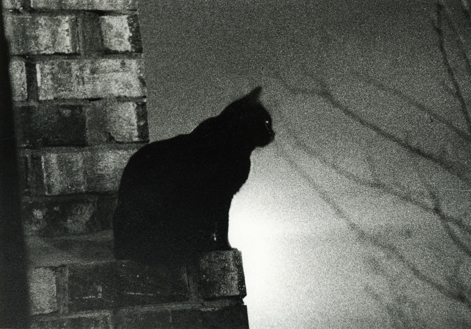 oholený čierna mačička pic kvalitné Teen Sex