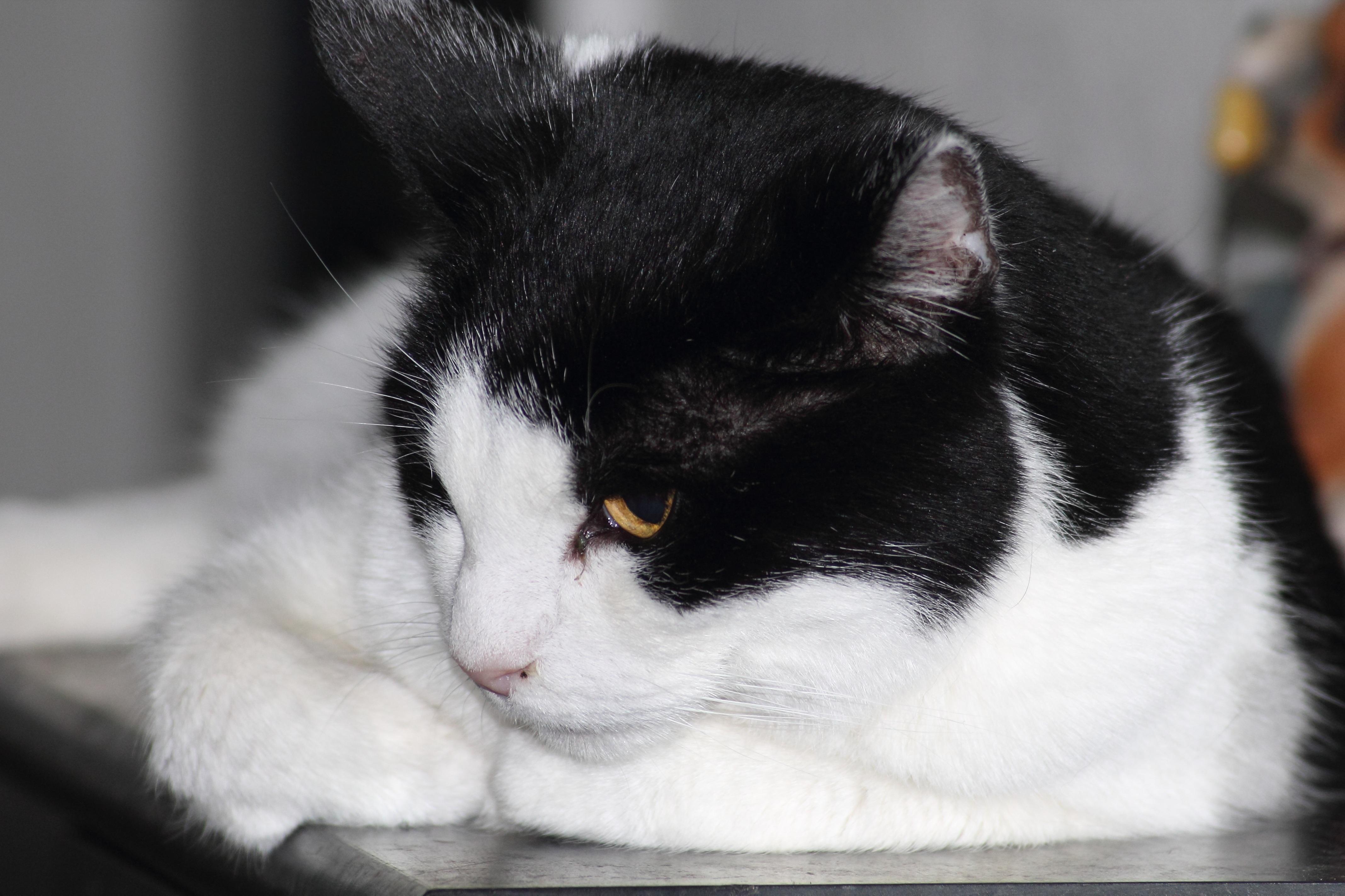 Obrázky krásne čierne mačička