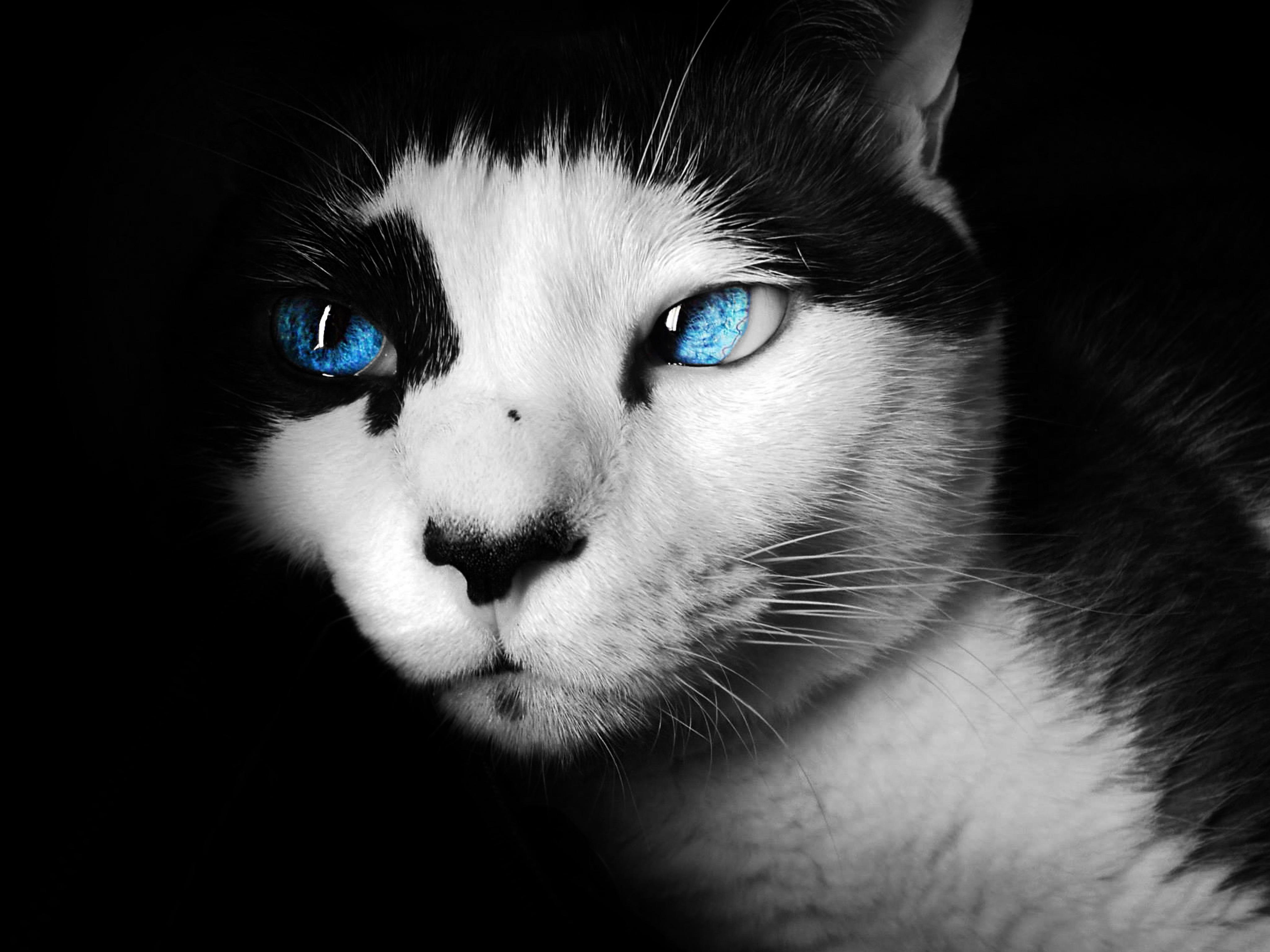 Fotos gratis : en blanco y negro, fotografía, animal, mirando ...