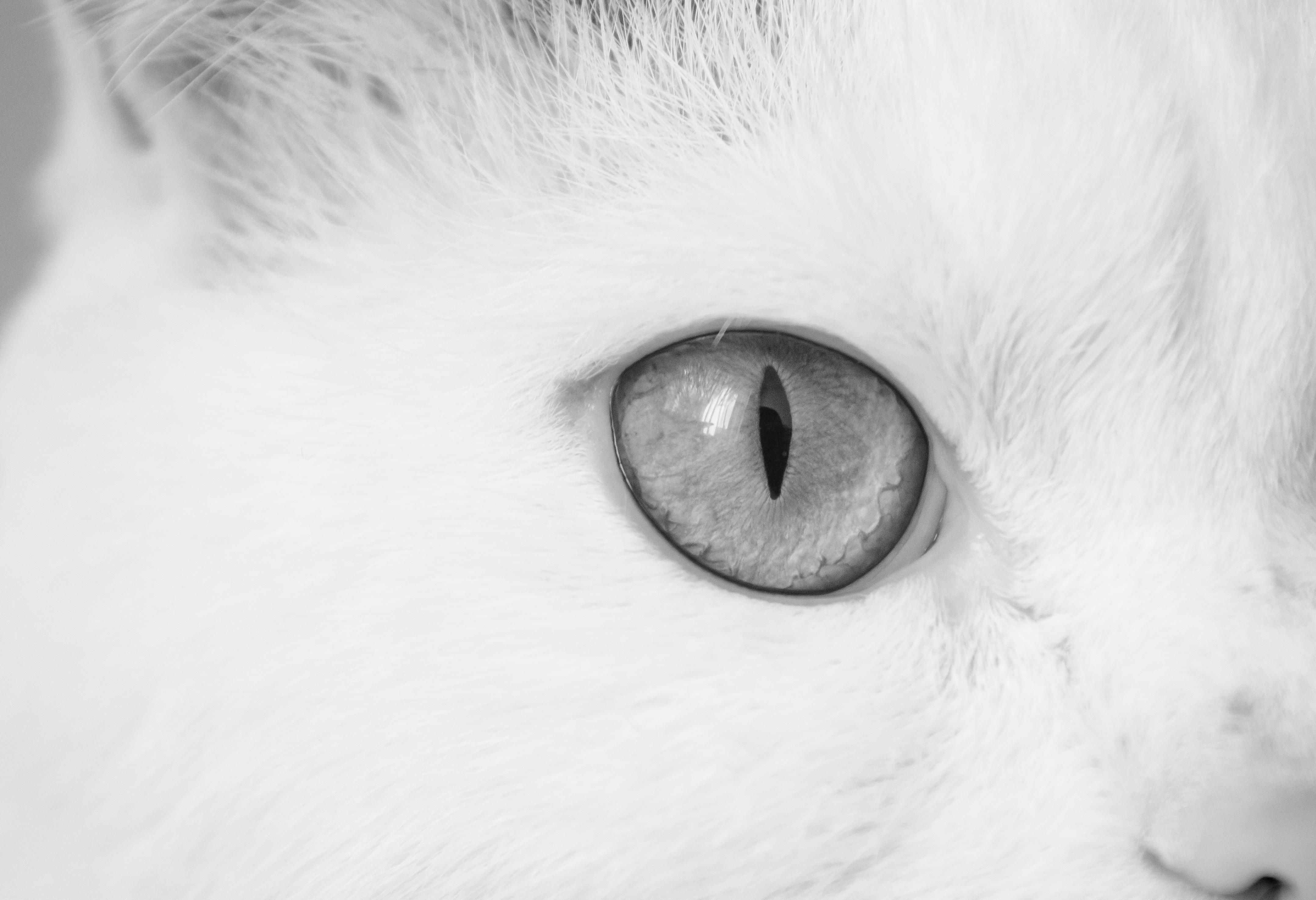 Images Gratuites Noir Et Blanc La Photographie Macro Oreille