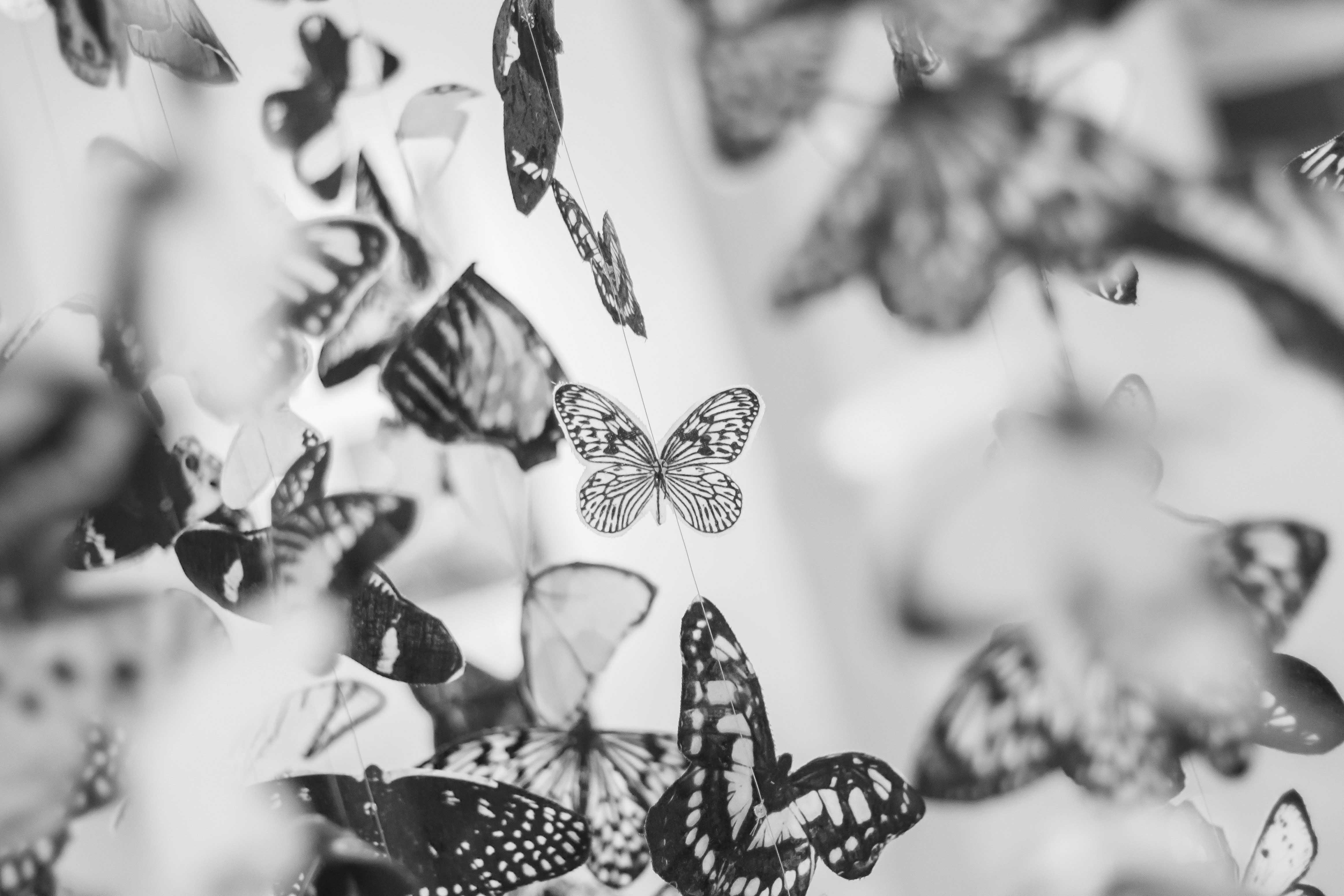 Images Gratuites Noir Et Blanc La Photographie Fleur