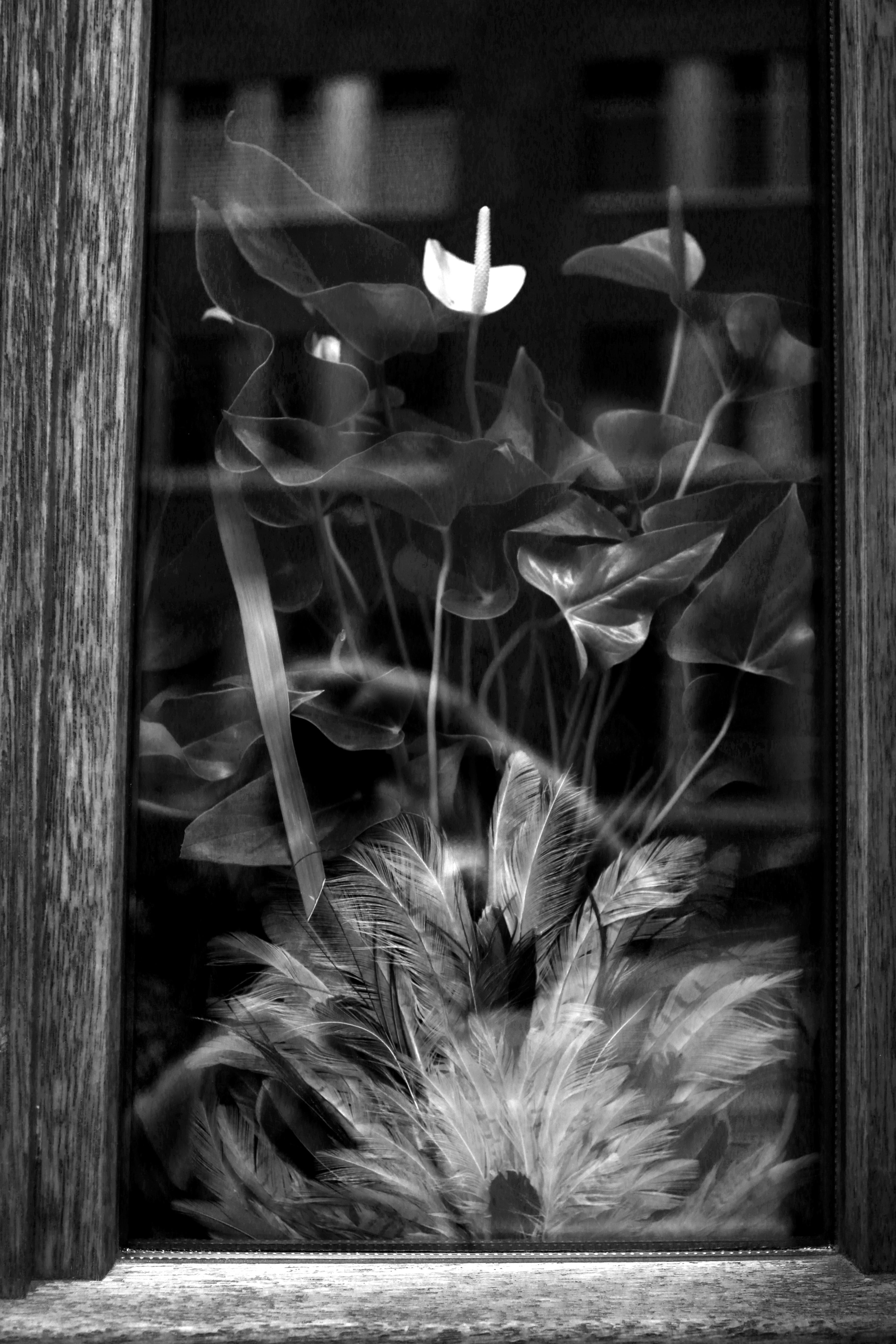 Free Images Black And White Flower Window Heidelberg Darkness