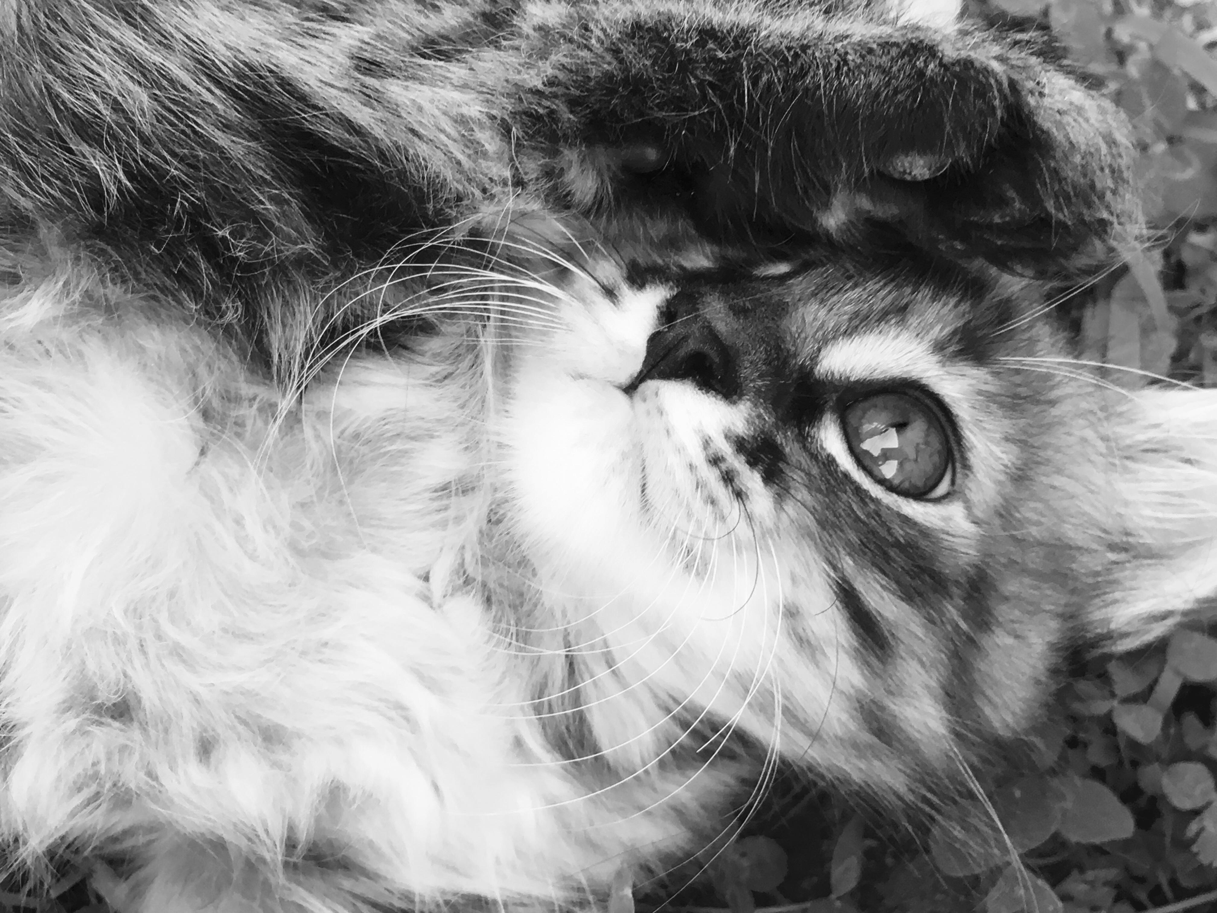 Katte tegning