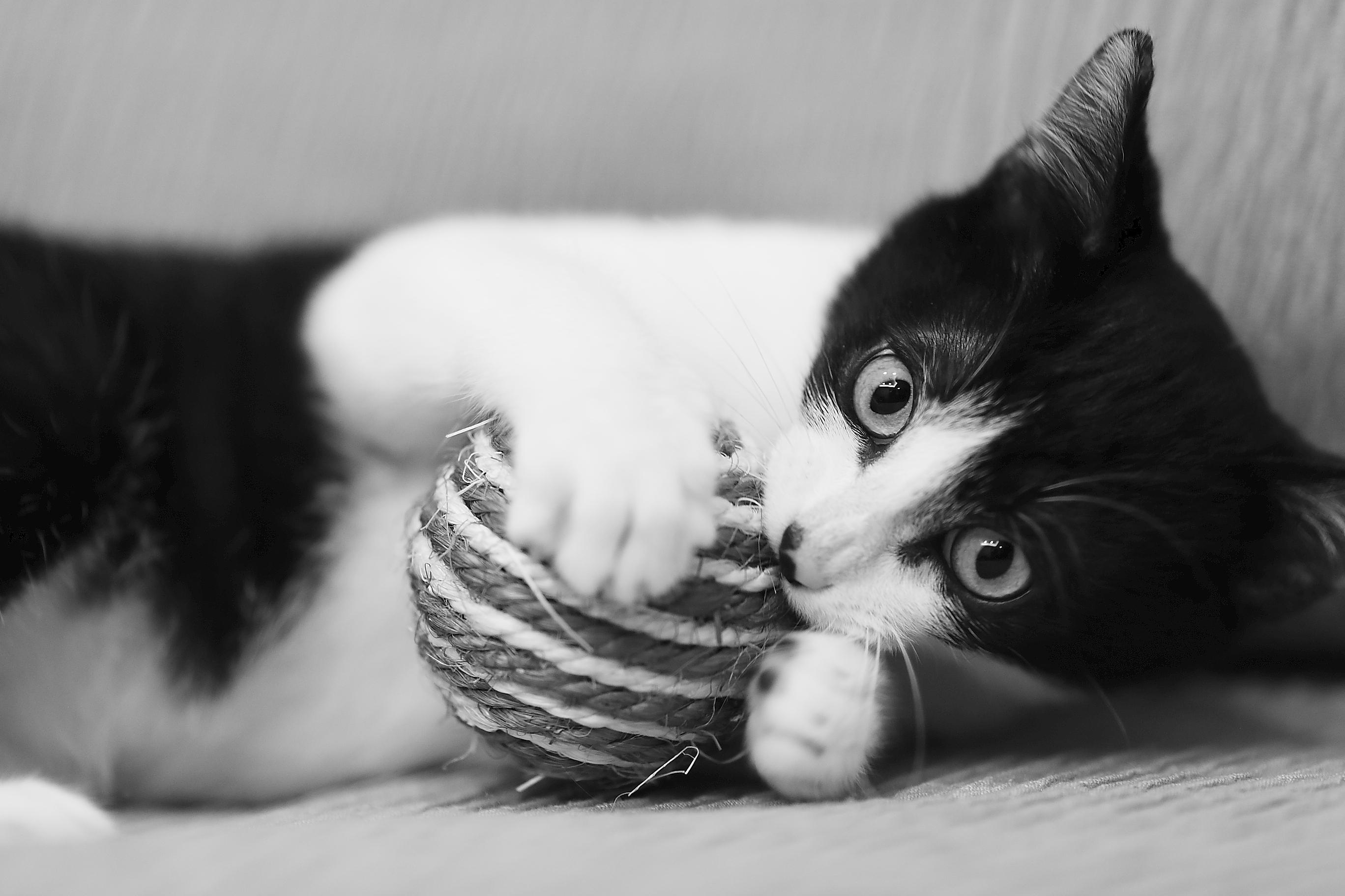 images gratuites noir et blanc la photographie chiot chien chaton chat canon monochrome. Black Bedroom Furniture Sets. Home Design Ideas