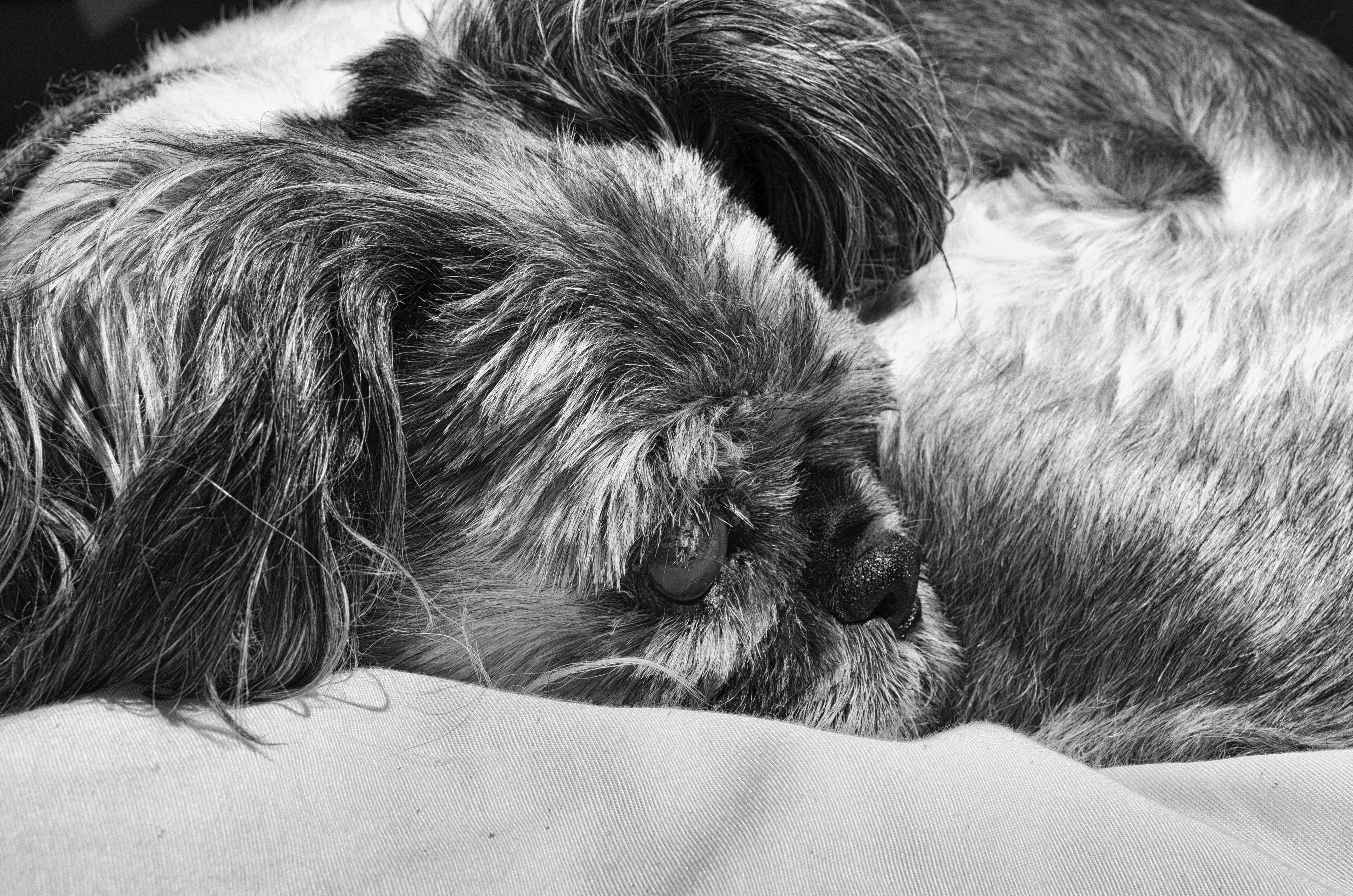 Gambar Hitam Dan Putih Anak Anjing Hewan Membelai Bulu