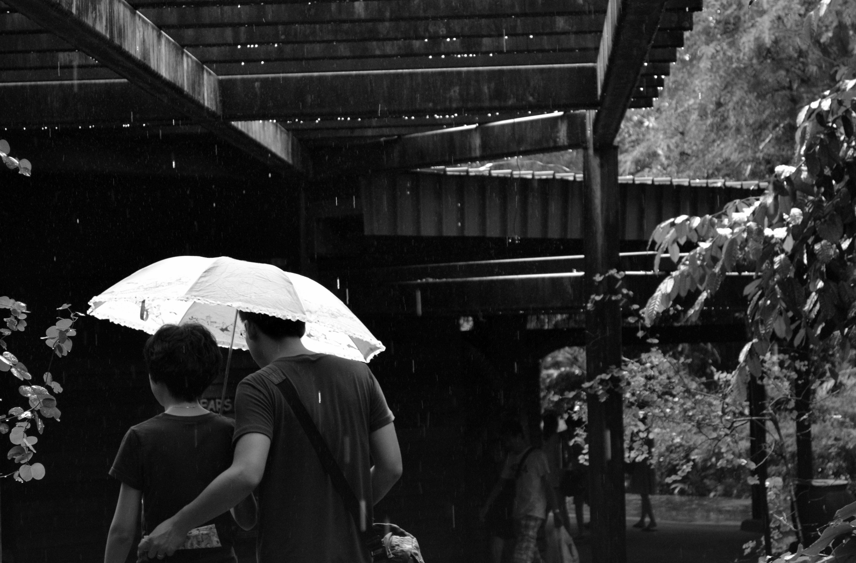 black and white white street photography rain crowd love umbrella couple  romantic black monochrome together outside