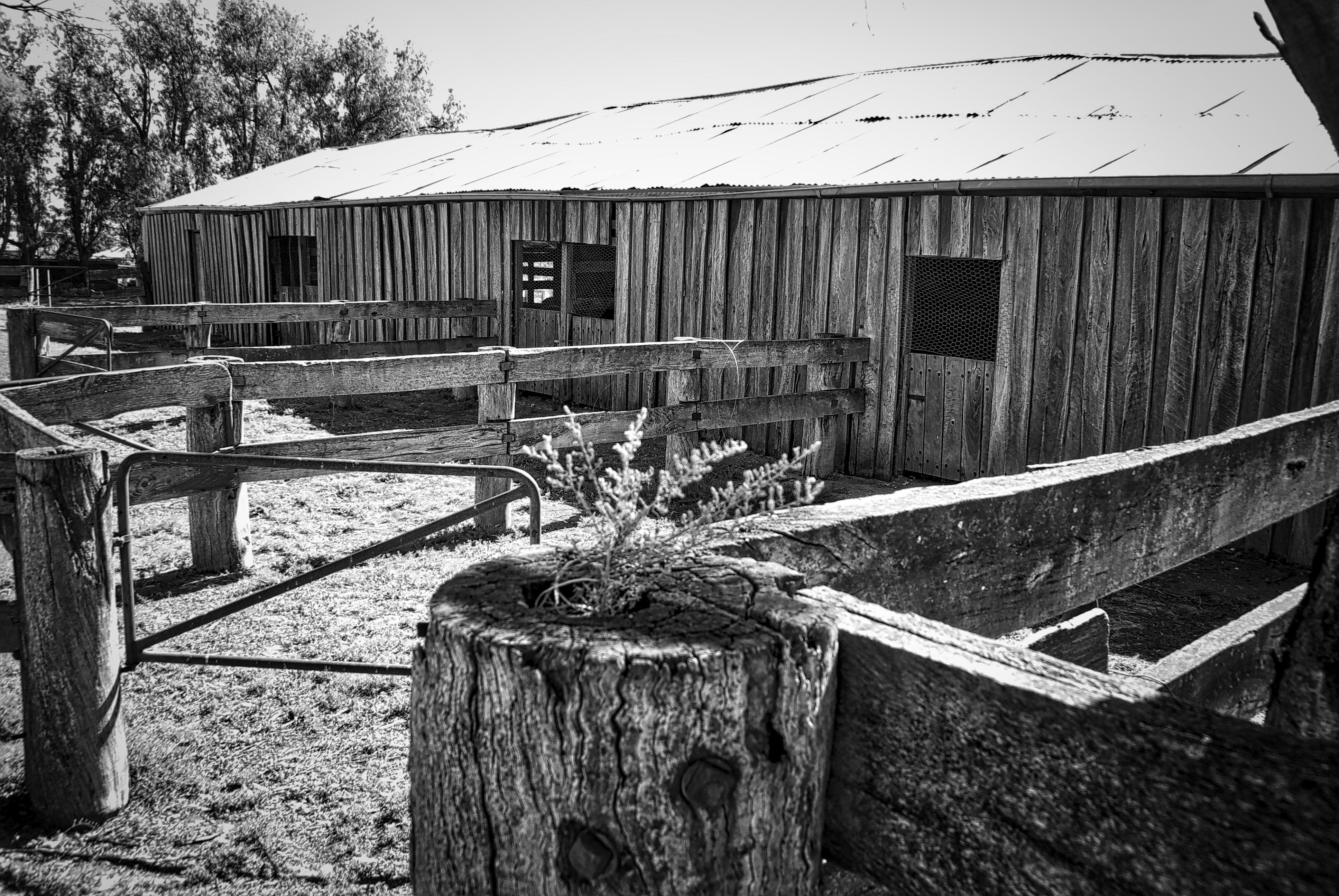 Images gratuites noir et blanc ferme cru maison bâtiment vieux grange cabanon rustique cabane transport rural agriculture historique