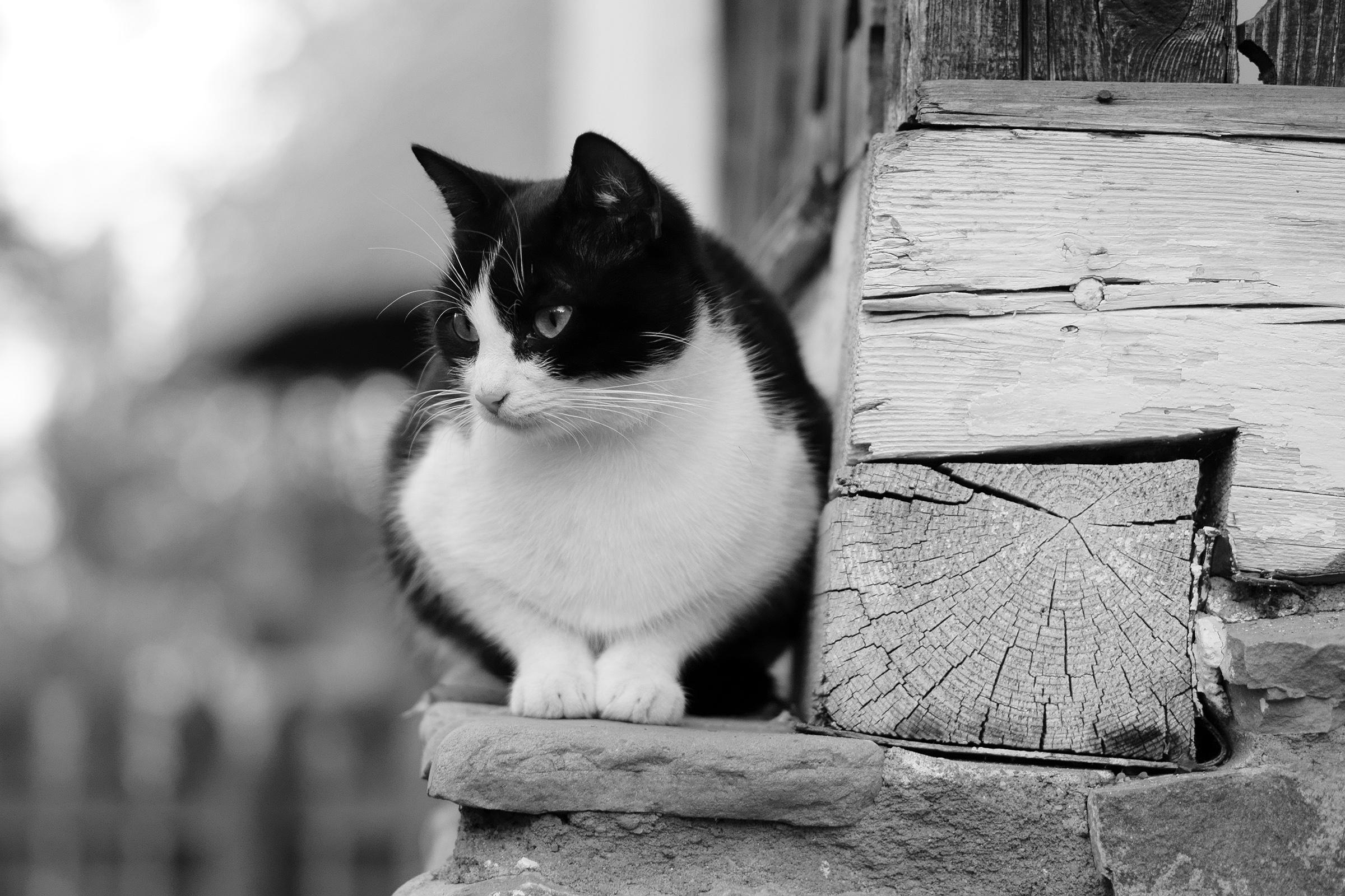 Verejné čierna mačička